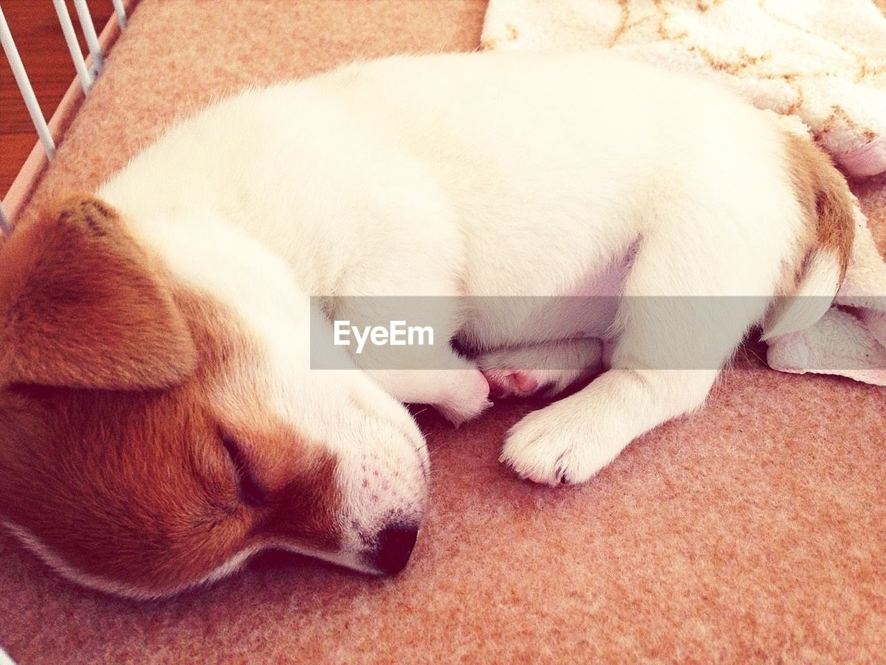 Close-Up Of Puppy Sleeping At Home