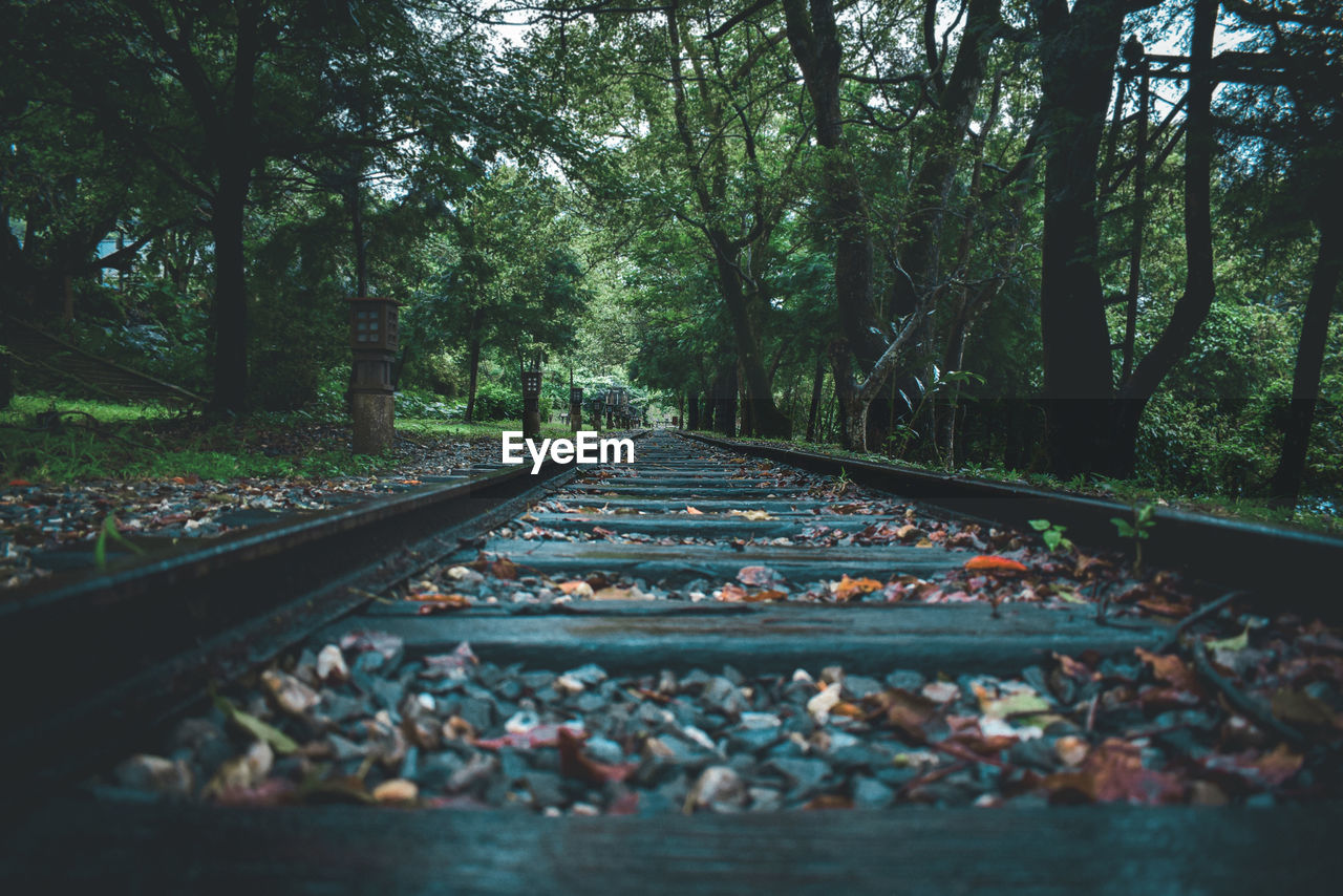 tree, track, transportation, rail transportation, railroad track, plant, direction, the way forward, nature, no people, forest, day, land, diminishing perspective, mode of transportation, outdoors, growth, non-urban scene, vanishing point, tranquility, surface level, gravel
