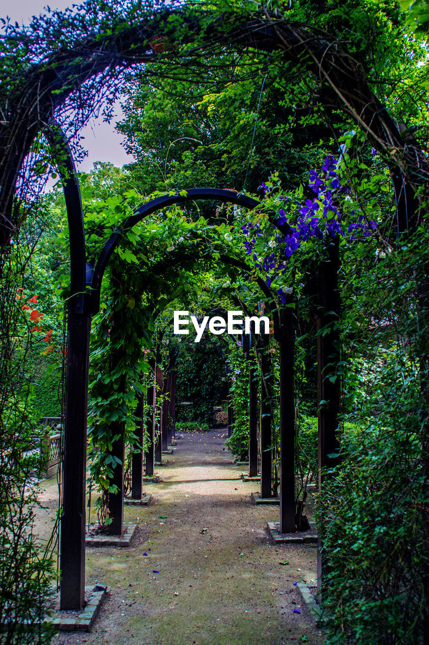 growth, the way forward, tree, nature, no people, walkway, beauty in nature, foliage, outdoors, day