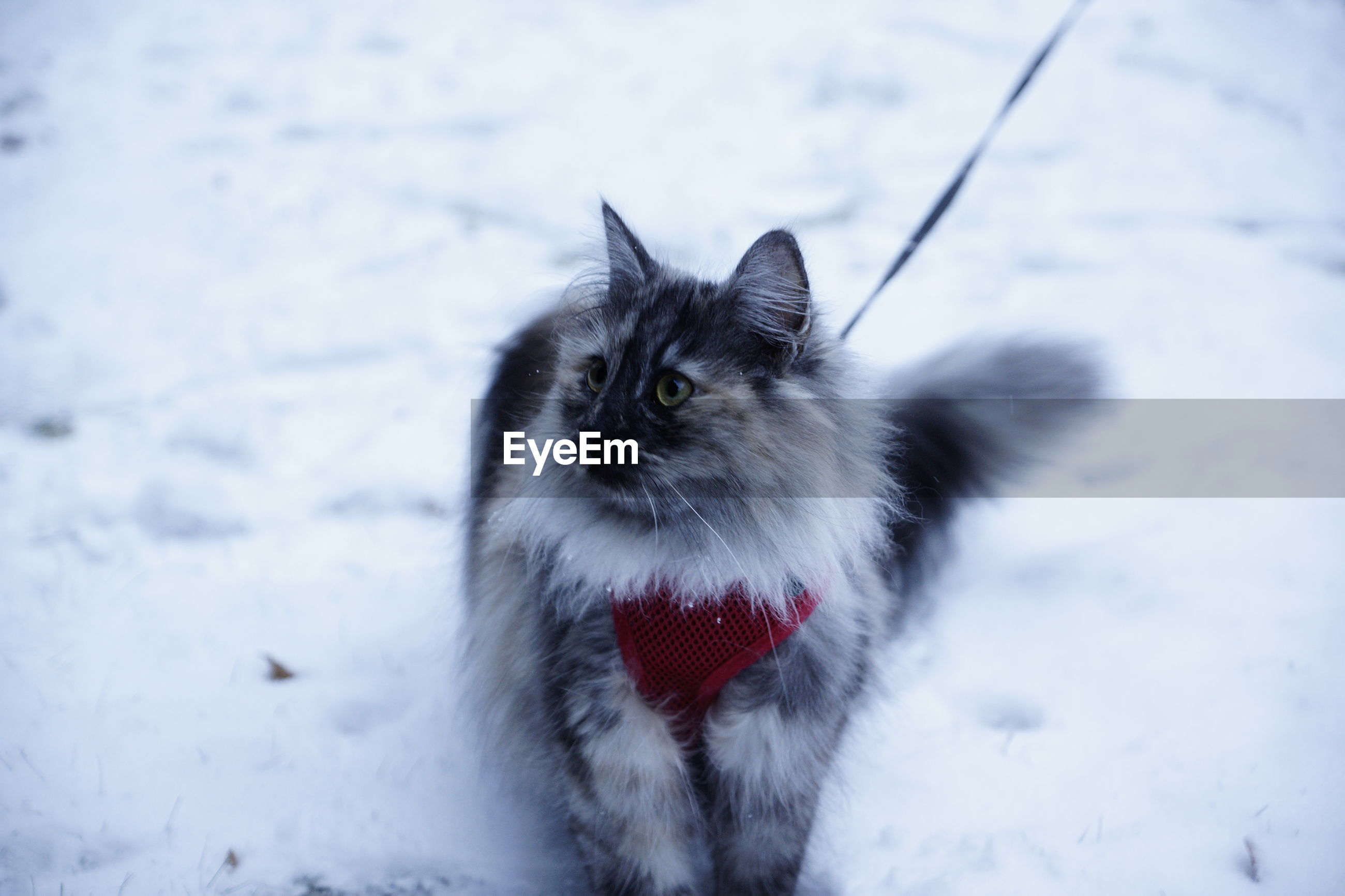CAT LOOKING AT SNOW FIELD