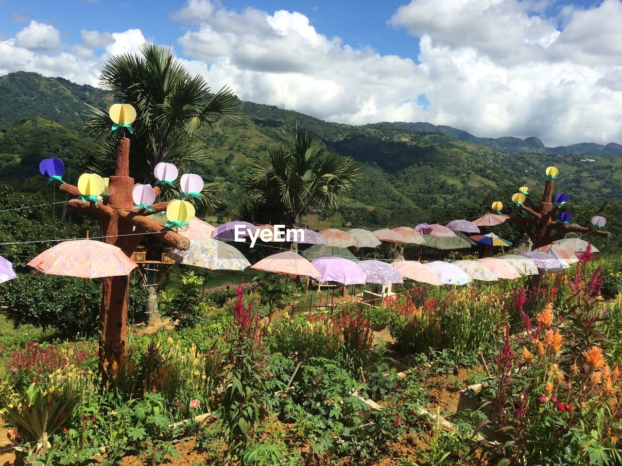 mountain, sky, plant, nature, cloud - sky, beauty in nature, multi colored, tree, no people, growth, day, environment, decoration, scenics - nature, religion, belief, land, flower, outdoors, landscape