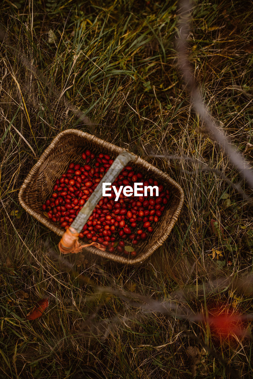 HIGH ANGLE VIEW OF FRESH FRUITS IN BASKET ON GRASS