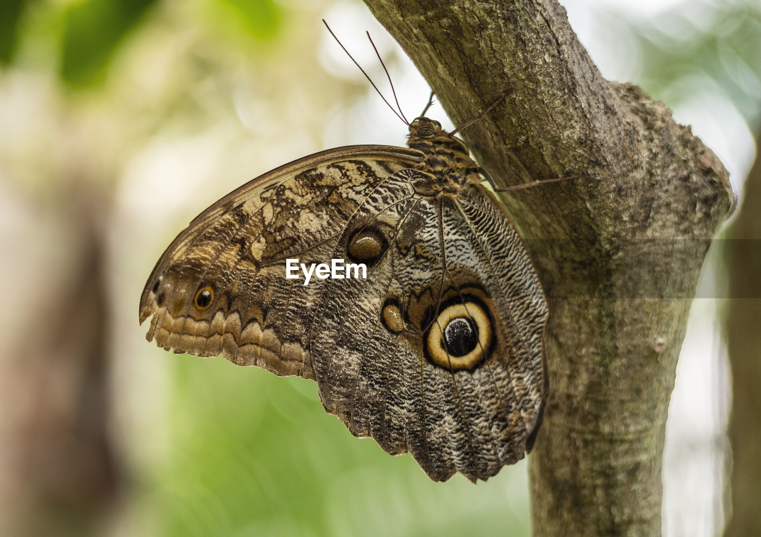 CLOSE-UP OF BUTTERFLY ON BRANCH