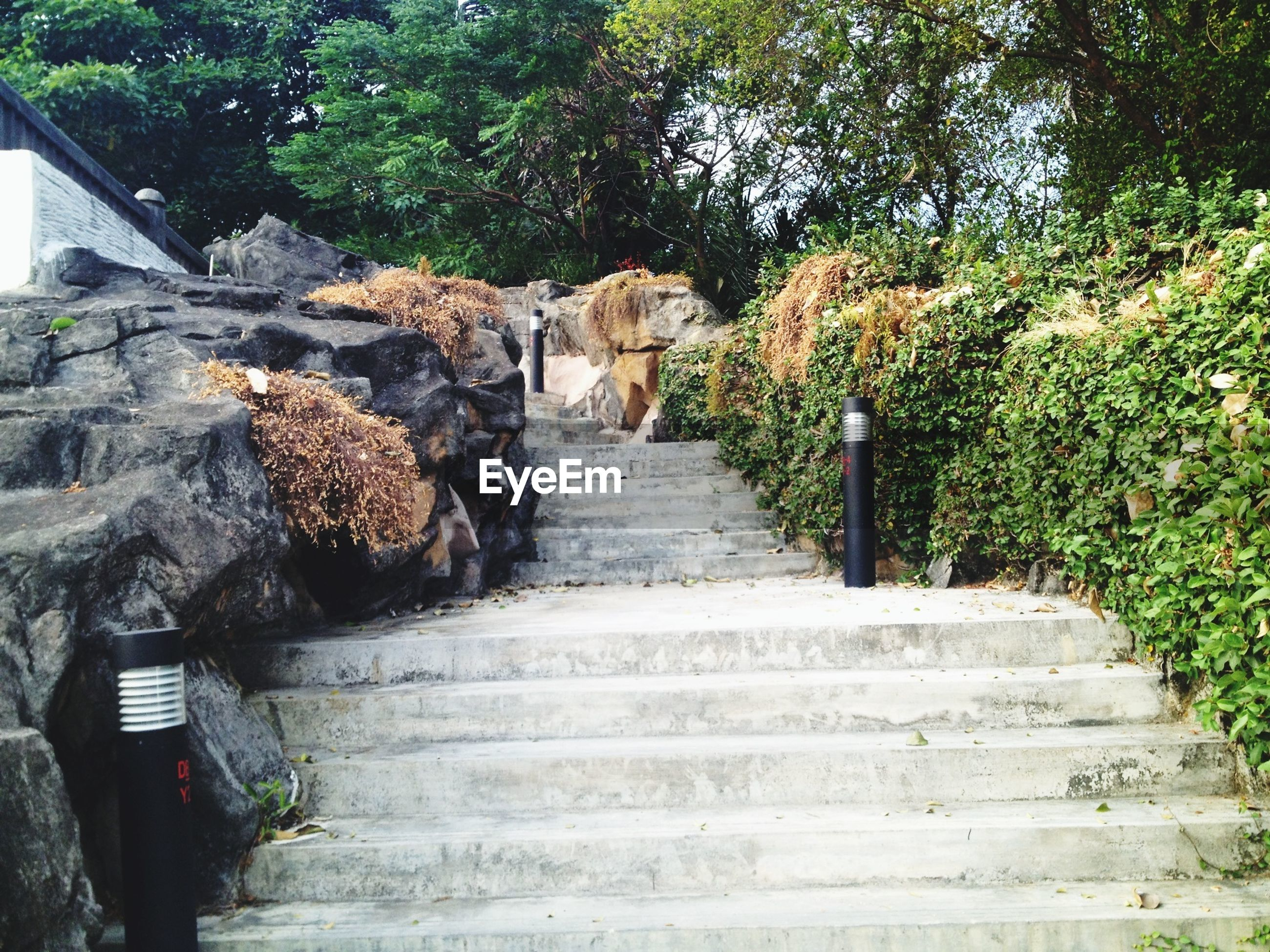 steps, tree, steps and staircases, the way forward, staircase, plant, growth, rock - object, footpath, nature, stairs, day, outdoors, tranquility, pathway, stone - object, walkway, wood - material, built structure