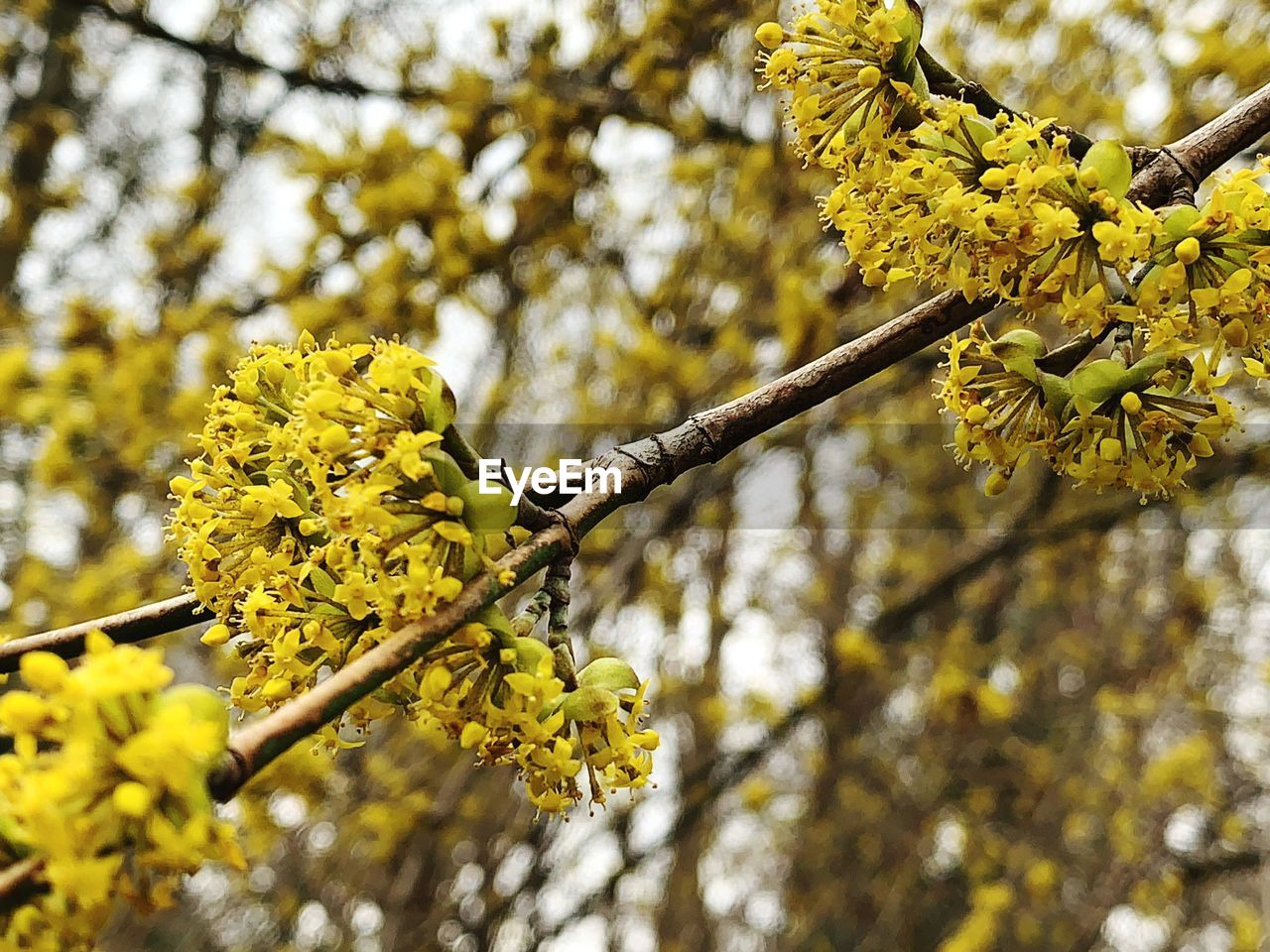 plant, yellow, tree, flower, growth, flowering plant, beauty in nature, branch, focus on foreground, fragility, nature, freshness, day, low angle view, vulnerability, no people, close-up, tranquility, blossom, springtime, outdoors, flower head, spring, lichen