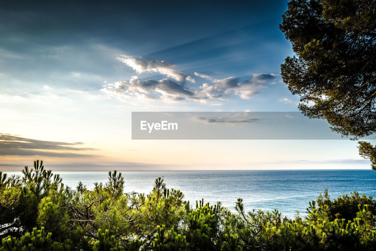 sky, water, beauty in nature, tree, plant, scenics - nature, sea, tranquility, cloud - sky, tranquil scene, nature, horizon over water, growth, no people, land, horizon, sunset, non-urban scene, idyllic, outdoors