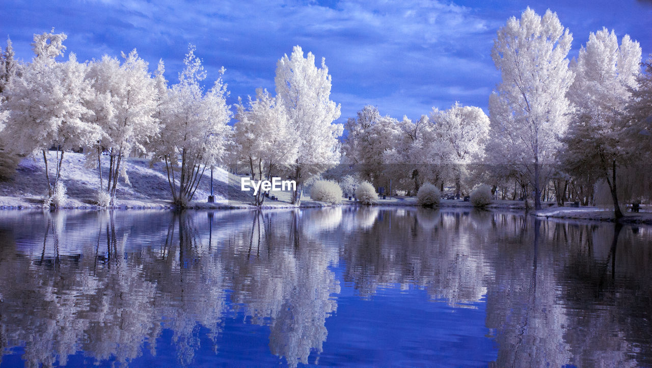 water, reflection, tree, beauty in nature, tranquil scene, tranquility, sky, plant, waterfront, cold temperature, lake, scenics - nature, nature, cloud - sky, no people, snow, winter, day, outdoors