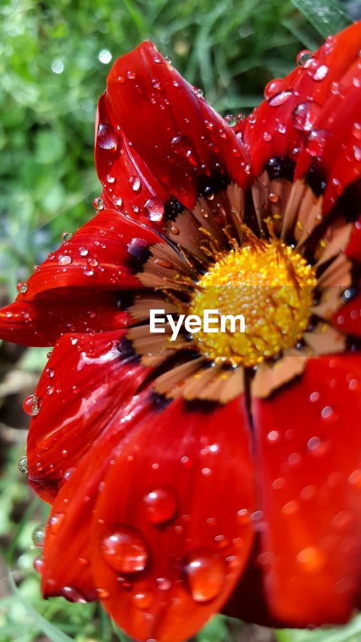 flower, red, freshness, fragility, petal, nature, growth, beauty in nature, close-up, flower head, no people, outdoors, plant, pollen, blooming, day, hibiscus