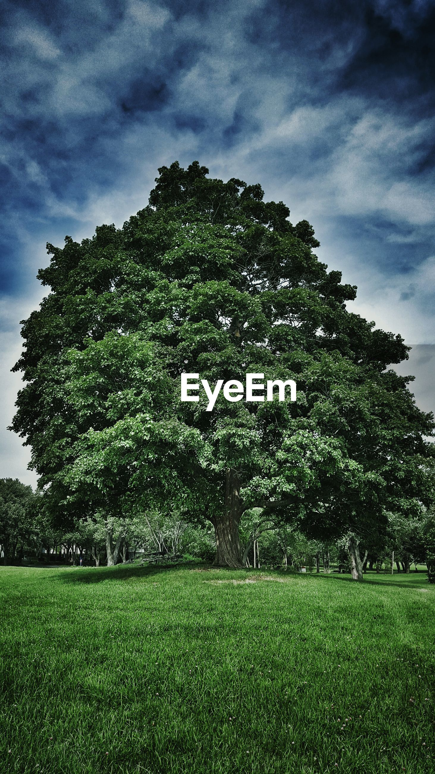 Low angle view of tree on grassy field against cloudy sky