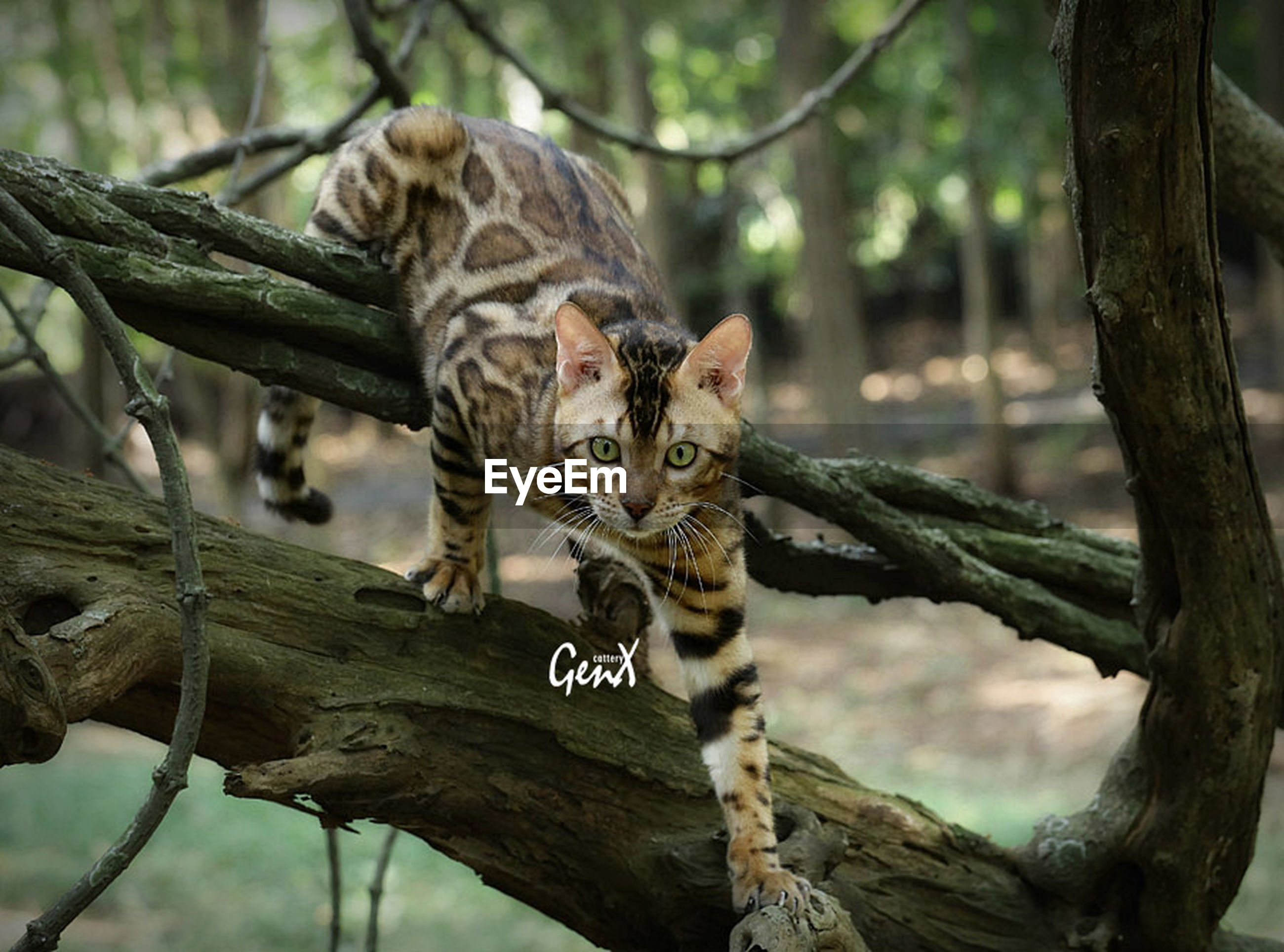 animal themes, animals in the wild, one animal, wildlife, mammal, tree, branch, tree trunk, forest, focus on foreground, nature, vertebrate, full length, zoo, day, outdoors, no people, looking at camera, zoology, wood - material