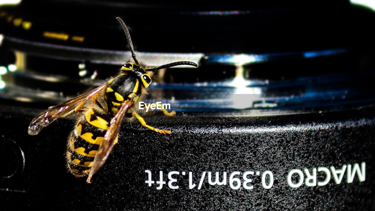 text, western script, animal themes, animal, animal wildlife, invertebrate, insect, one animal, close-up, animals in the wild, no people, communication, focus on foreground, night, indoors, animal antenna, black color, sign, information, yellow