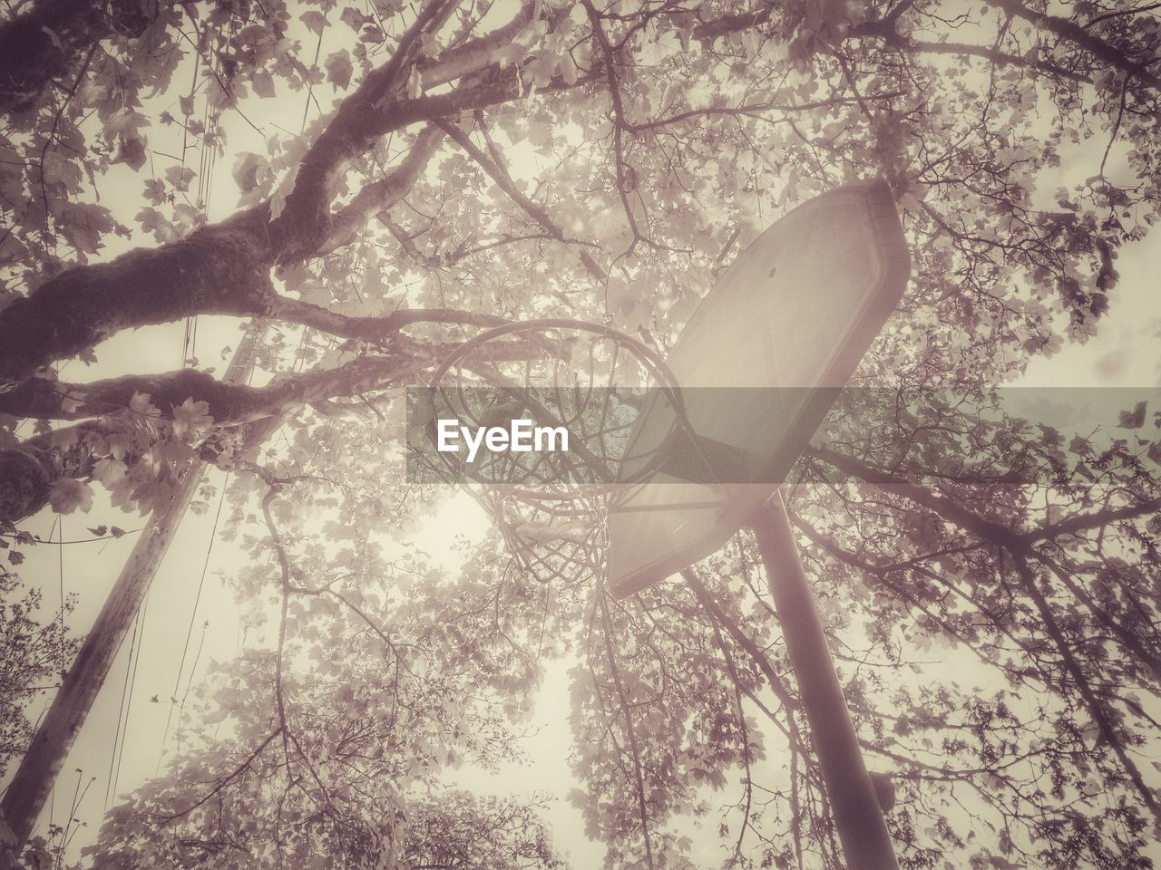 tree, branch, low angle view, outdoors, nature, day, no people, beauty in nature, sky, close-up