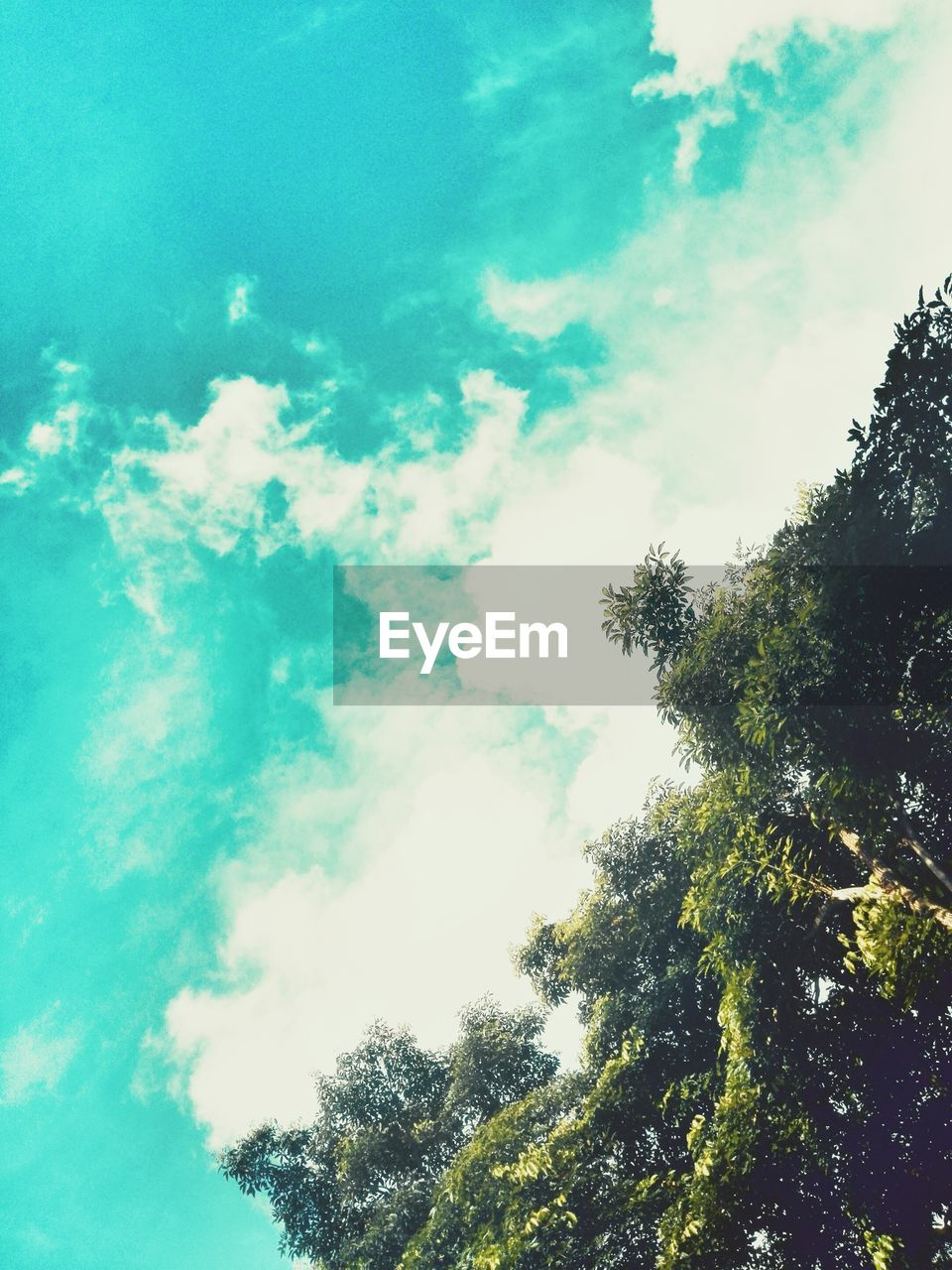 Tree Nature Sky Water Low Angle View Outdoors Day No People Cloud - Sky Beauty In Nature Scenics Forest EyeEm EyeEm Best Edits EyeEmBestPics The Week On EyeEm EyeEmNewHere EyeEm Gallery Photography High Angle View Tree