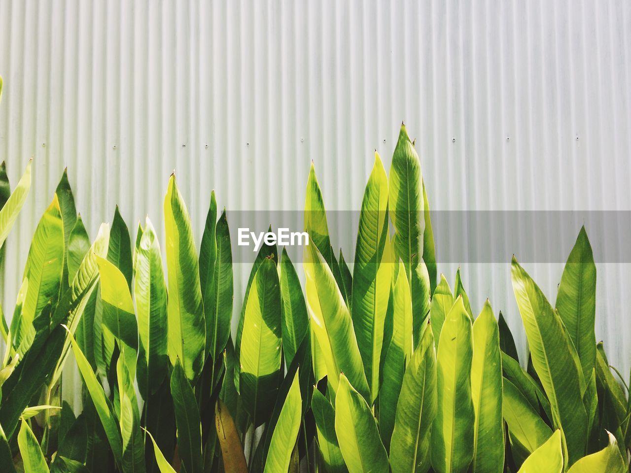 Fresh Green Plants Against Fence