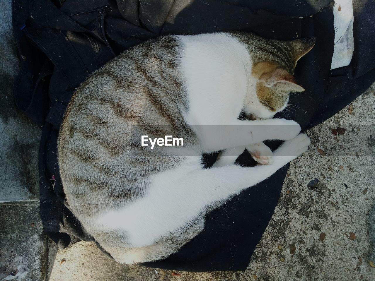HIGH ANGLE VIEW OF A CAT SLEEPING
