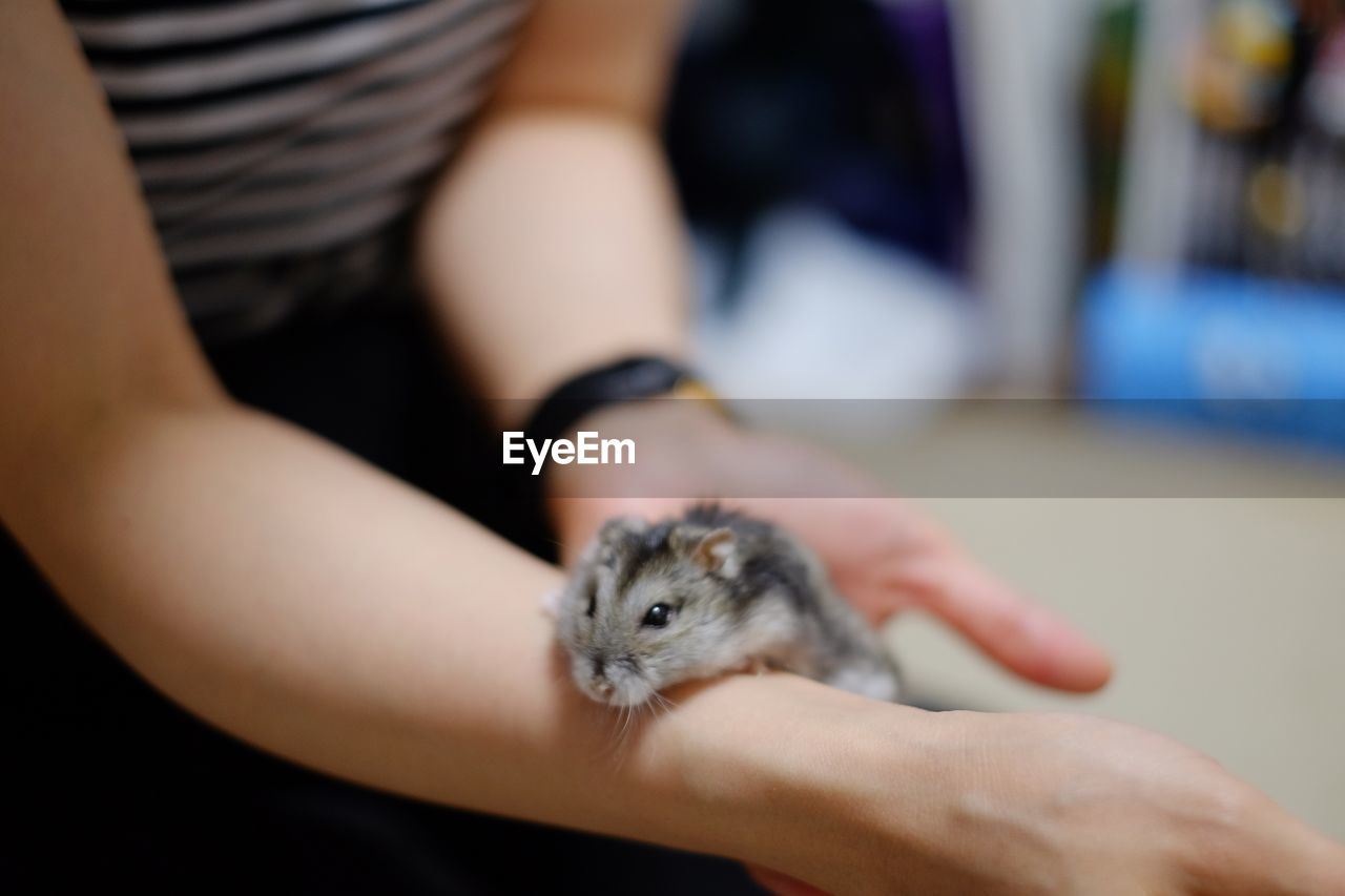 Midsection of woman holding hamster