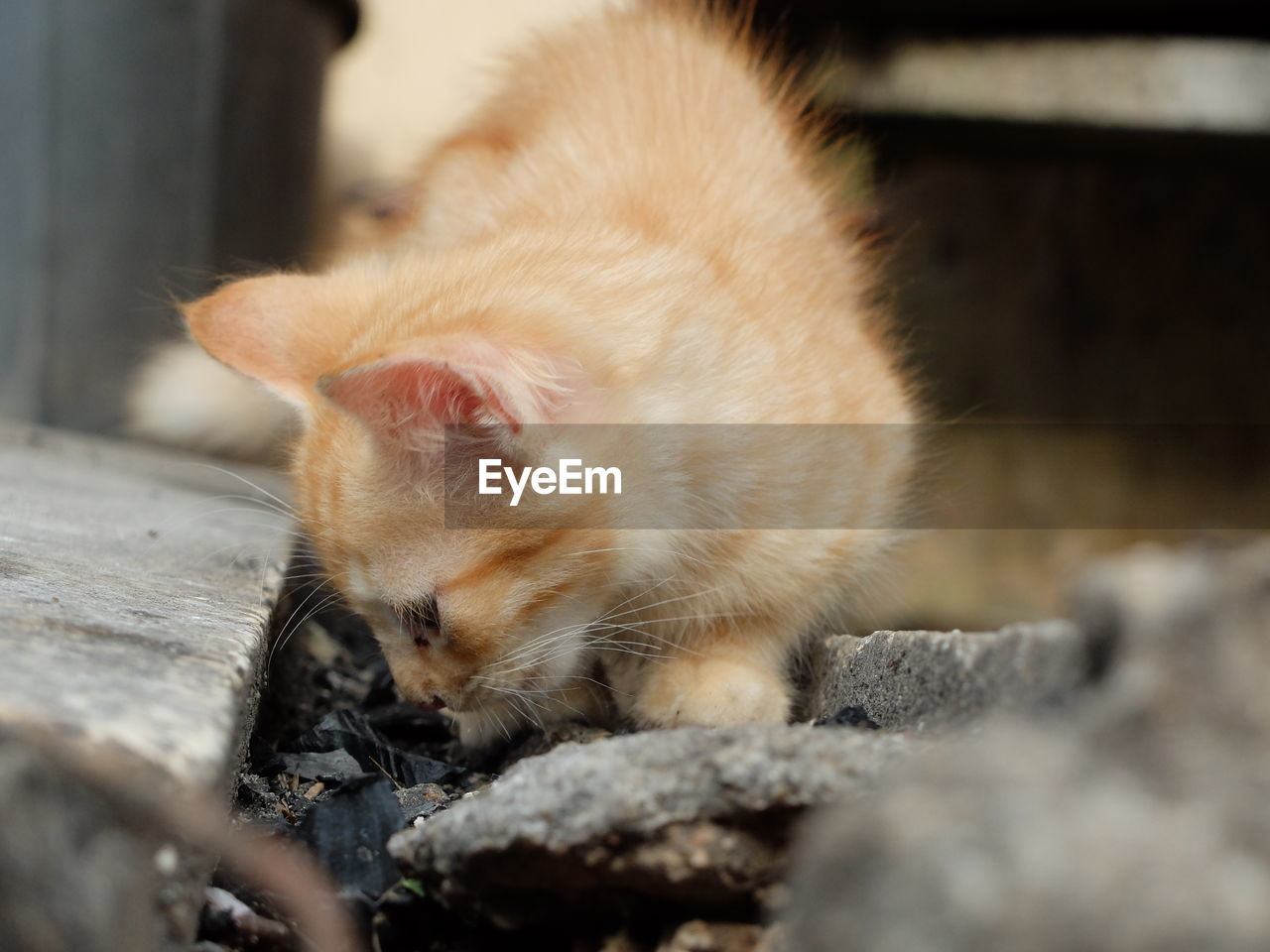 animal themes, mammal, animal, one animal, pets, domestic, vertebrate, domestic animals, domestic cat, feline, cat, no people, selective focus, relaxation, solid, day, close-up, rock, outdoors, whisker, ginger cat