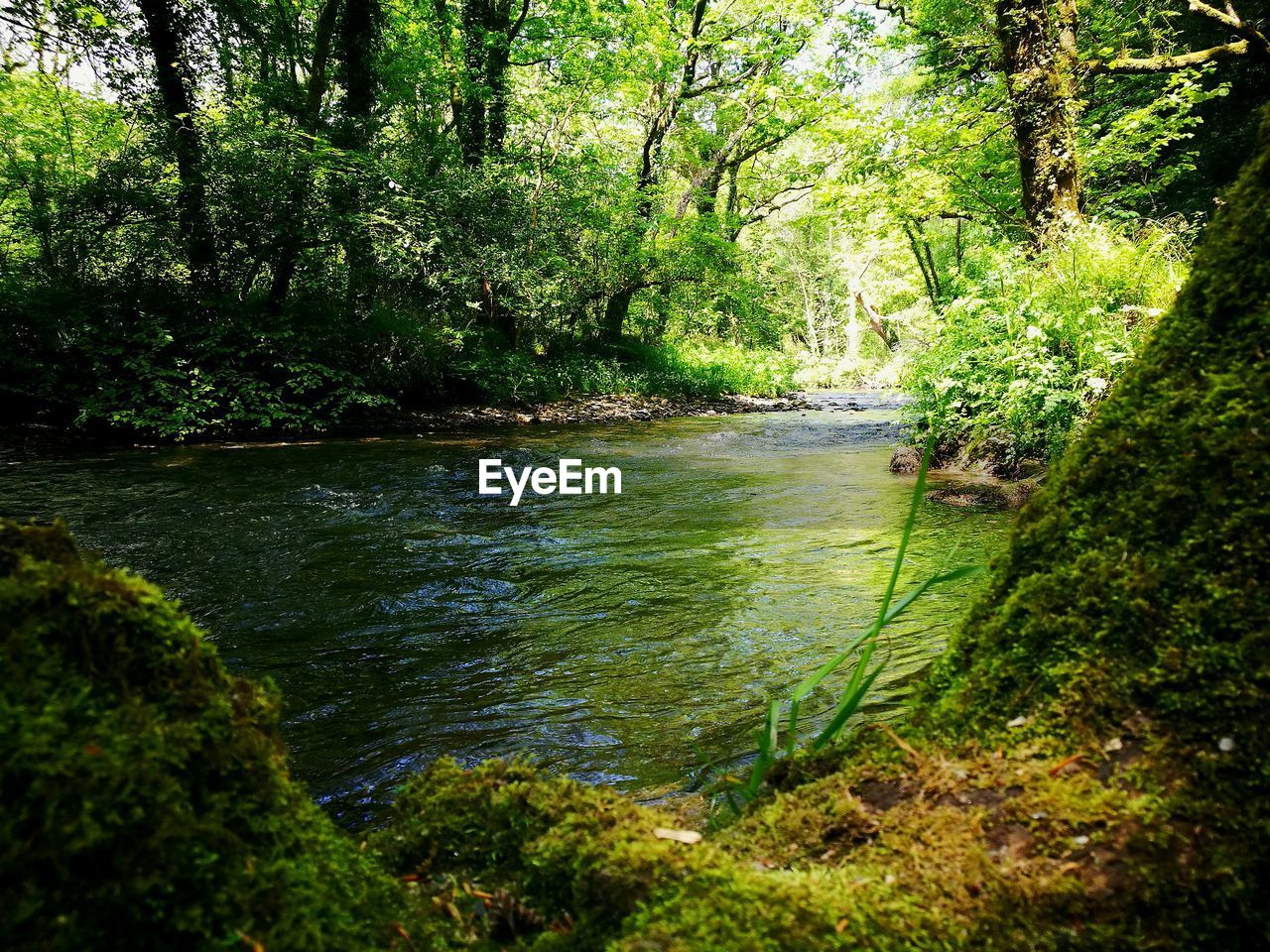 tree, forest, plant, land, water, beauty in nature, nature, tranquility, growth, scenics - nature, green color, no people, tranquil scene, woodland, river, foliage, day, lush foliage, outdoors, flowing, flowing water, rainforest