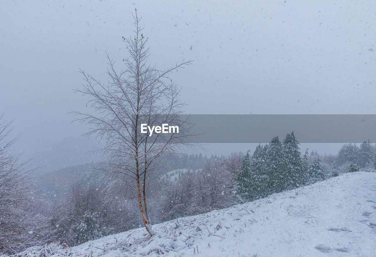 snow, winter, cold temperature, tree, plant, bare tree, scenics - nature, sky, nature, beauty in nature, white color, no people, covering, tranquility, tranquil scene, non-urban scene, day, environment, snowing, outdoors, extreme weather, snowcapped mountain, blizzard