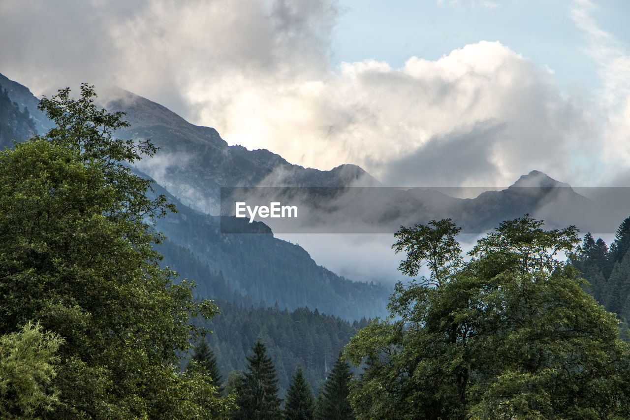 Trees Growing By Mountains During Foggy Weather
