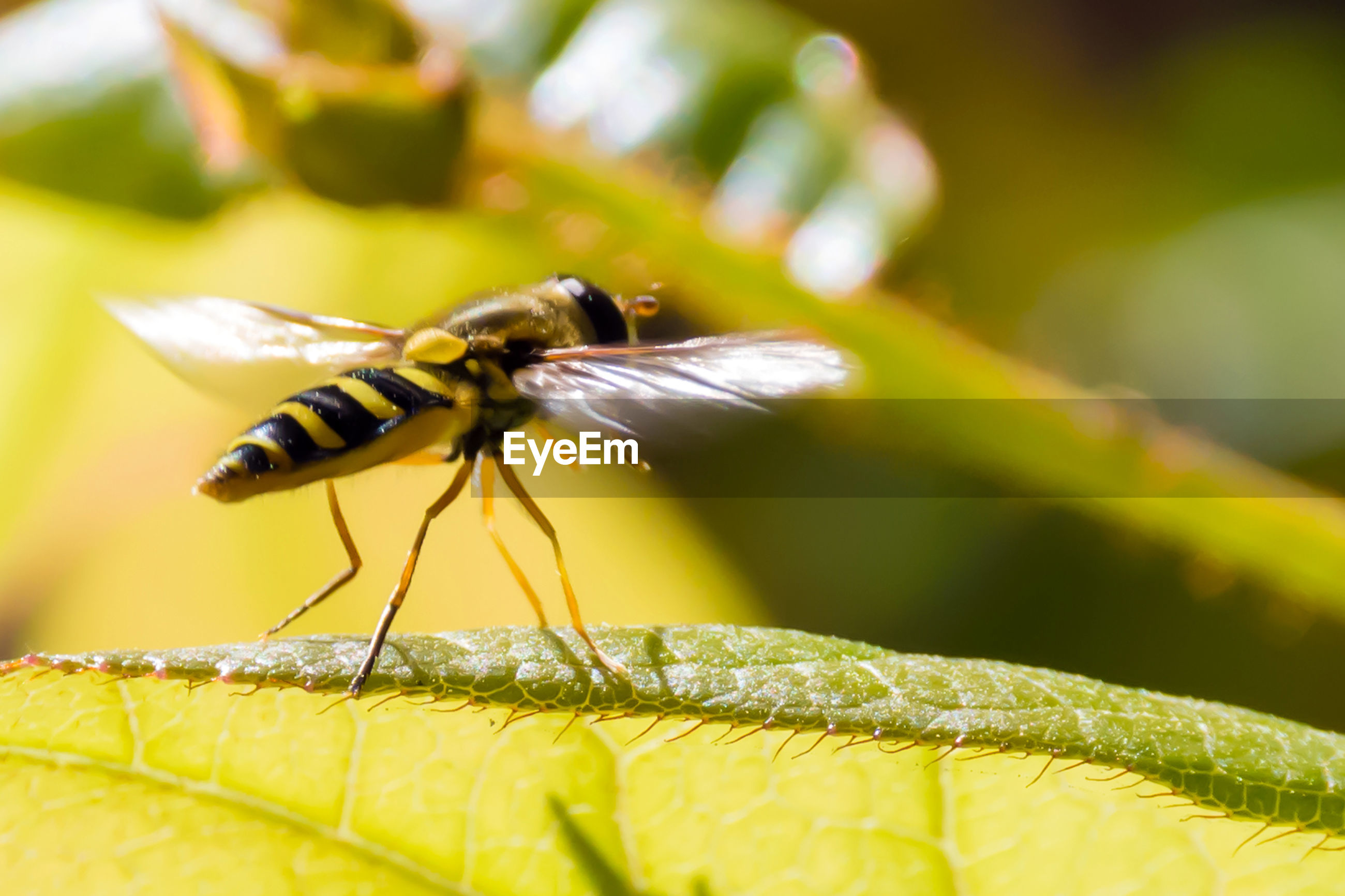 insect, animal themes, one animal, animals in the wild, nature, close-up, day, outdoors, fragility, no people, leaf, animal wildlife, yellow, flower, plant, sunlight, beauty in nature, growth, freshness, bee, flower head