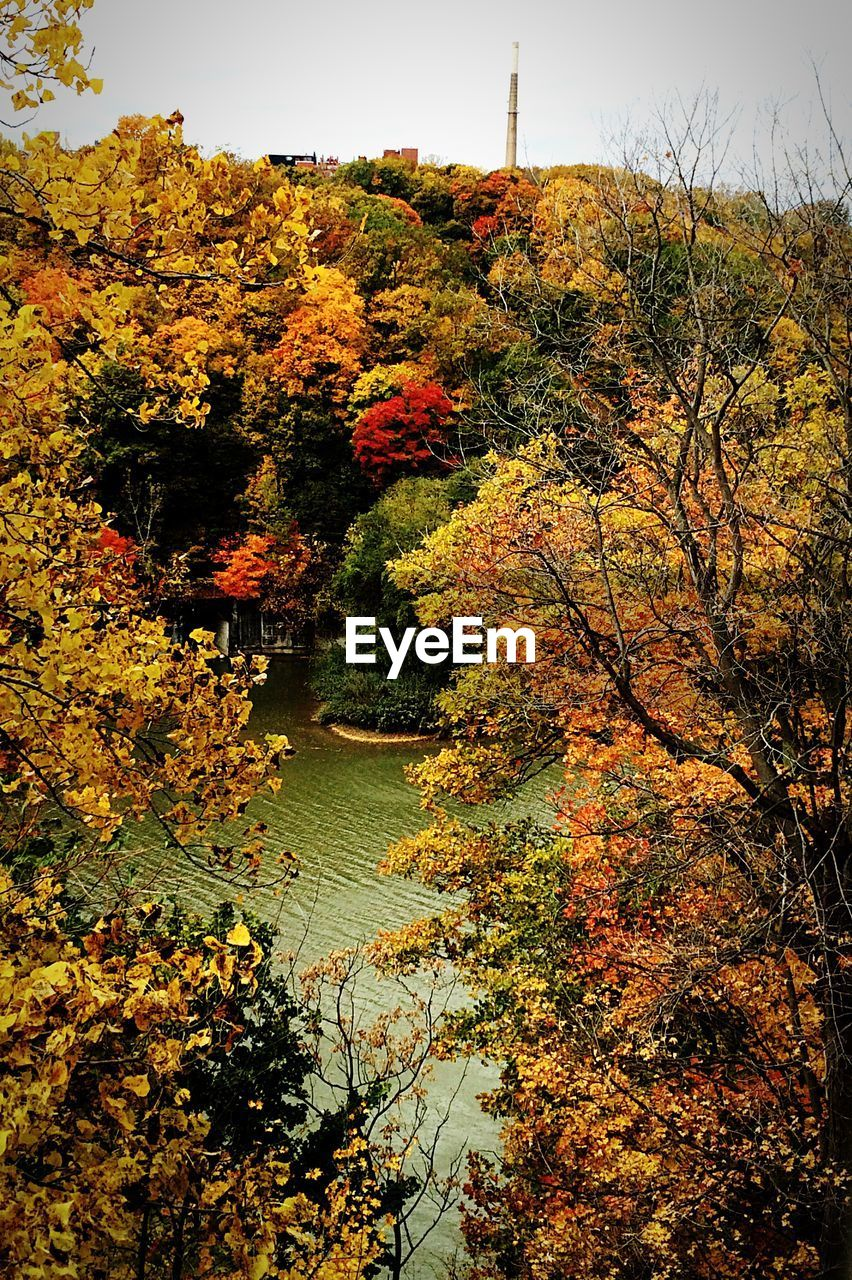 autumn, tree, nature, change, beauty in nature, tranquility, tranquil scene, no people, leaf, growth, scenics, vegetation, outdoors, lake, plant, day, water, landscape, sky