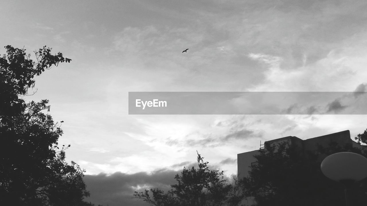 flying, low angle view, tree, bird, sky, animal themes, outdoors, animals in the wild, no people, silhouette, day, nature, building exterior, beauty in nature, architecture