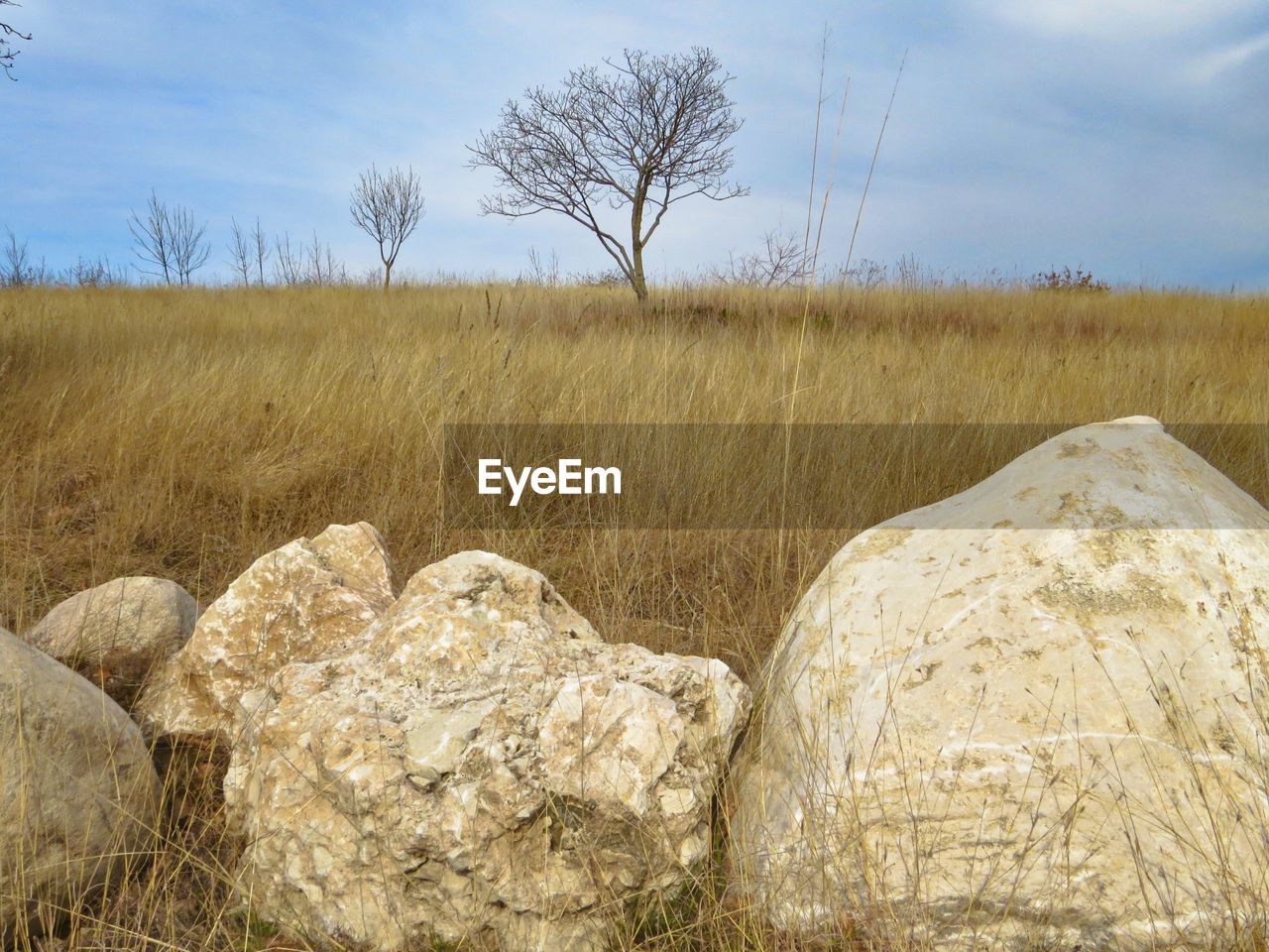 sky, field, plant, land, landscape, environment, tree, tranquil scene, tranquility, nature, no people, grass, cloud - sky, scenics - nature, beauty in nature, solid, day, non-urban scene, rock, rock - object, outdoors