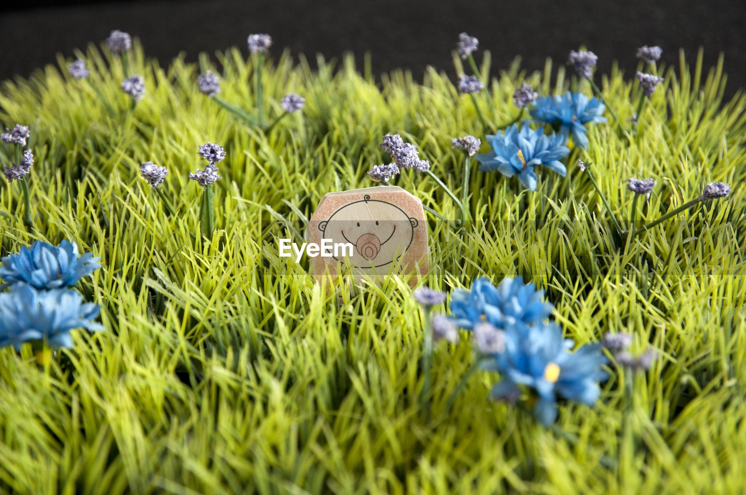 BLUE FLOWERS IN GARDEN