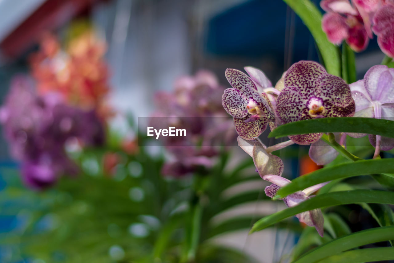 flower, flowering plant, plant, beauty in nature, growth, vulnerability, fragility, freshness, close-up, petal, nature, focus on foreground, no people, flower head, day, pink color, selective focus, inflorescence, plant part, one animal, outdoors, purple, pollination