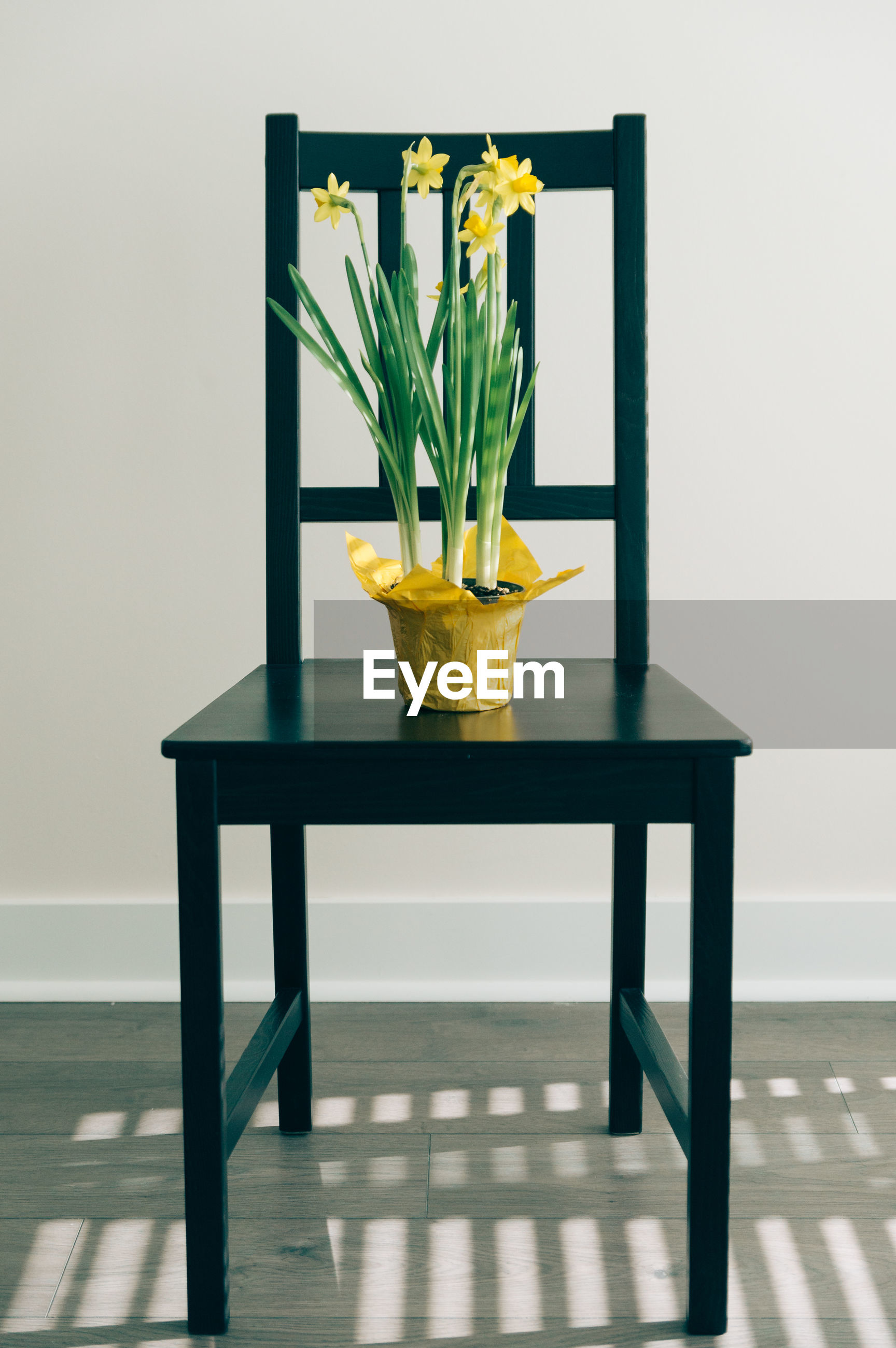 Potted plant on chair against wall at home