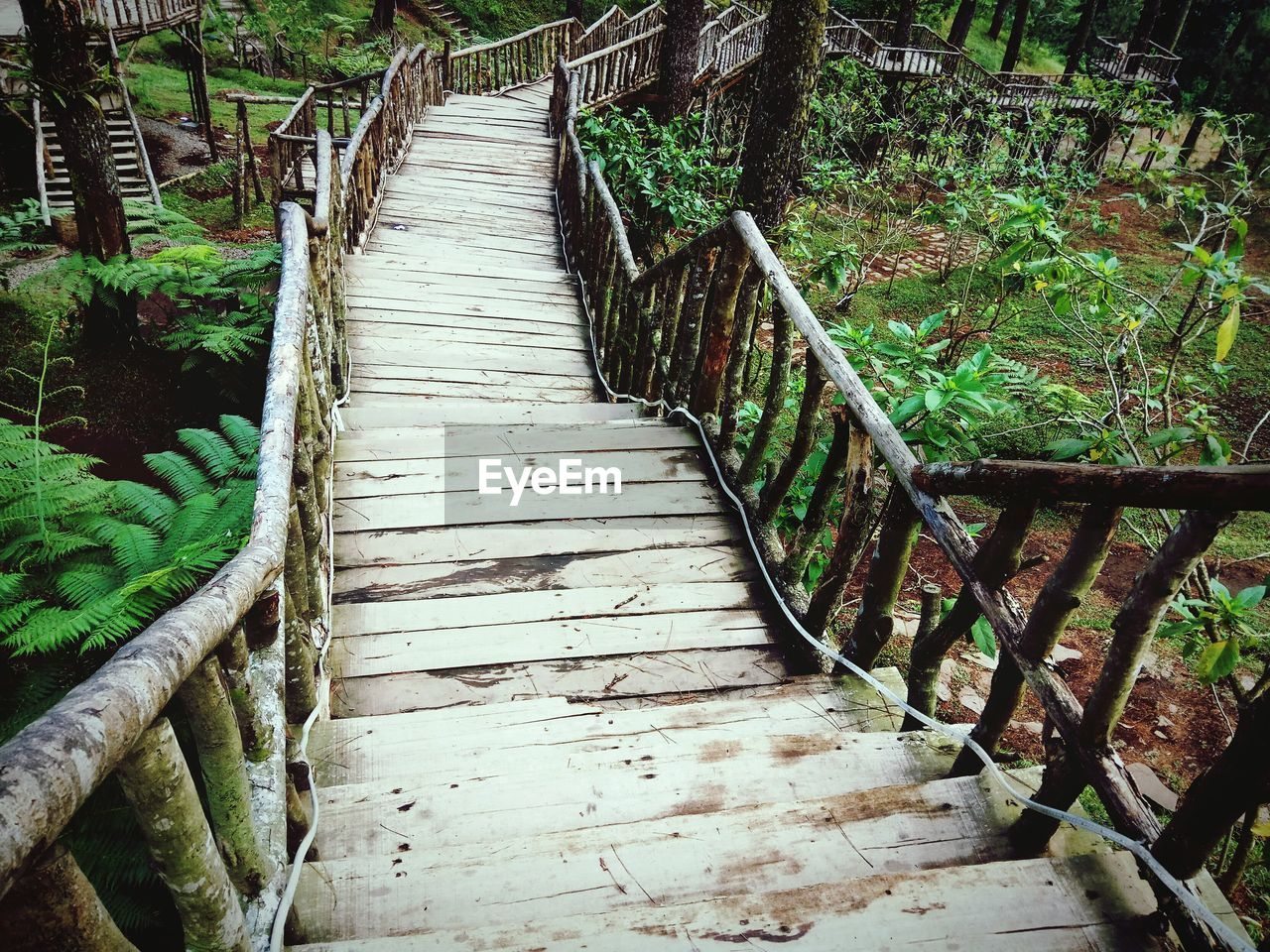 plant, the way forward, direction, railing, wood - material, no people, footpath, nature, tree, tranquility, land, day, forest, architecture, outdoors, beauty in nature, green color, bridge, growth, staircase, wood, footbridge, diminishing perspective, wood paneling, long