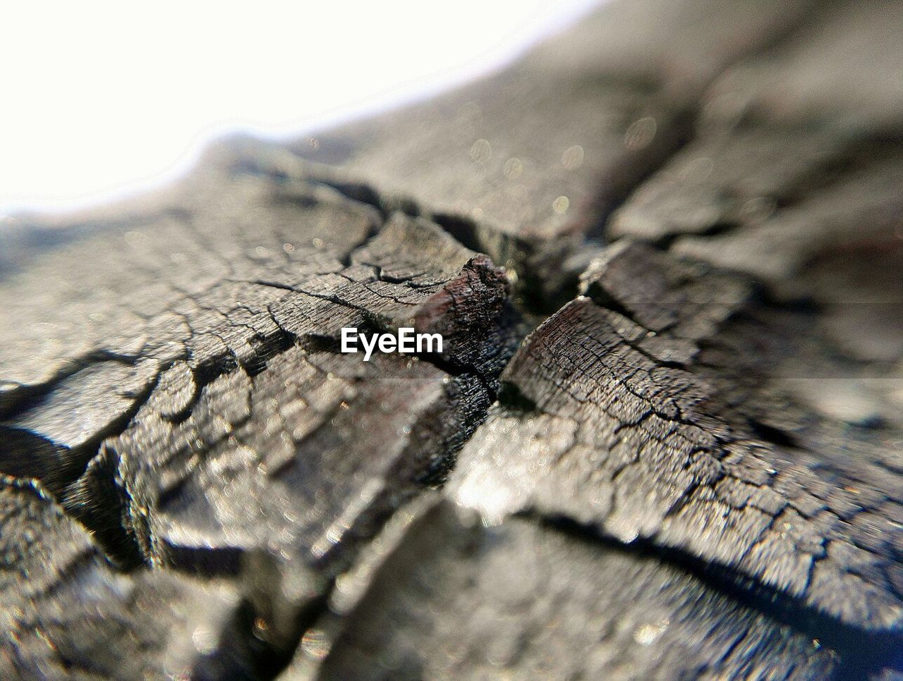 close-up, textured, selective focus, no people, cracked, wood - material, full frame, backgrounds, day, nature, outdoors, tree ring