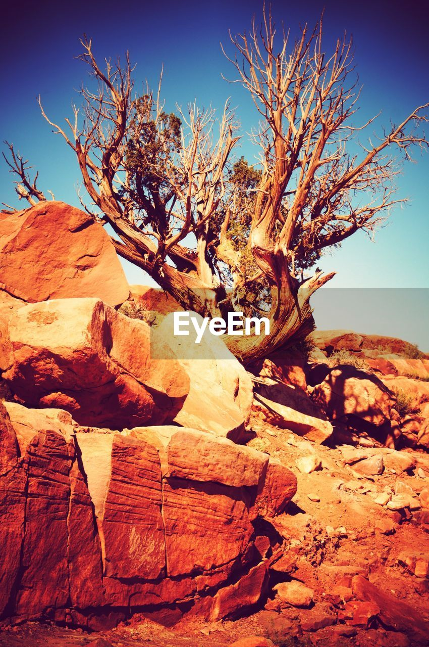 nature, tranquility, arid climate, beauty in nature, tranquil scene, scenics, outdoors, sunlight, no people, bare tree, landscape, day, clear sky, desert, physical geography, sky, tree, dead tree