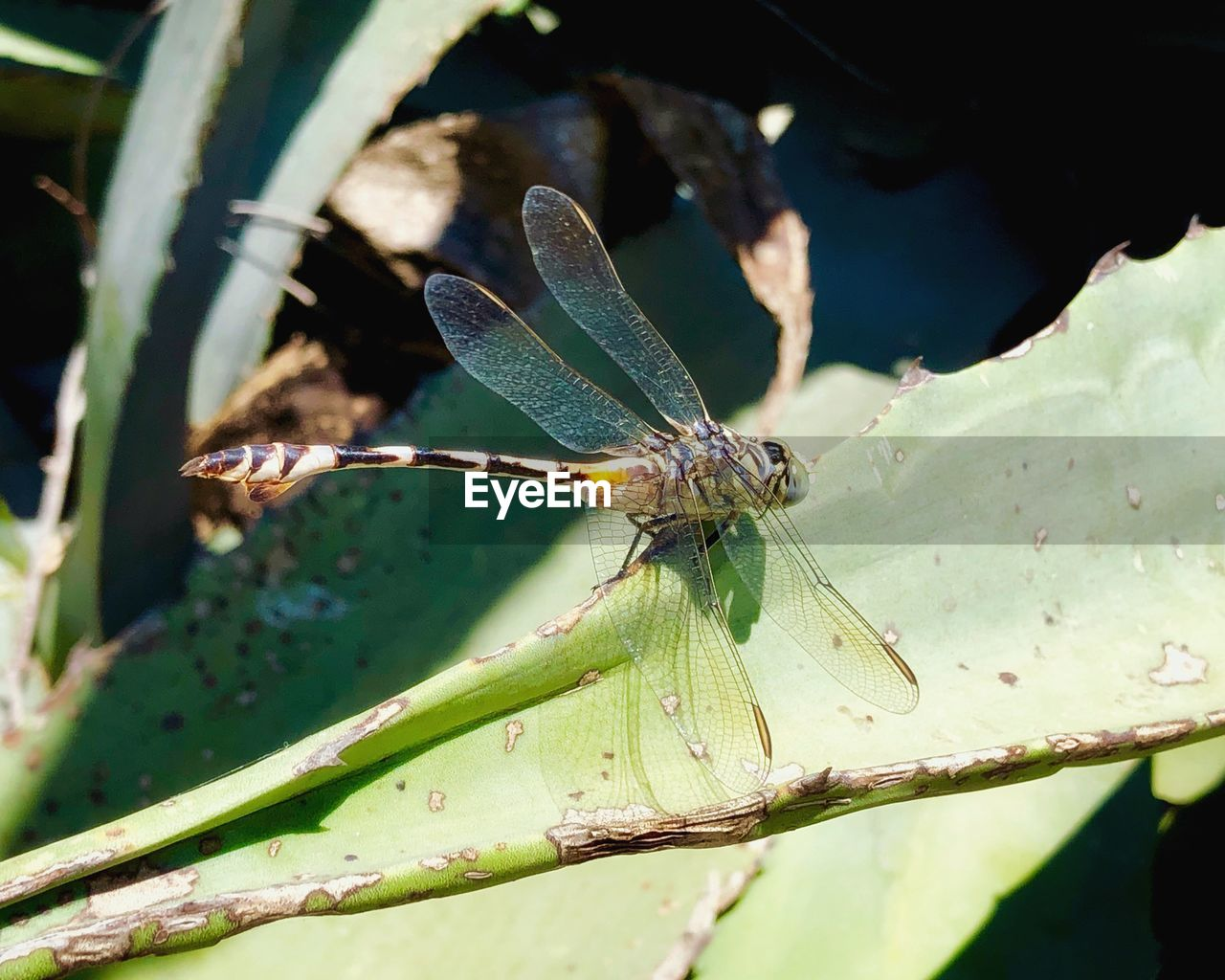 insect, invertebrate, animal wildlife, animal, animals in the wild, animal themes, one animal, close-up, plant part, leaf, green color, plant, nature, day, focus on foreground, no people, animal wing, sunlight, beauty in nature, growth, outdoors