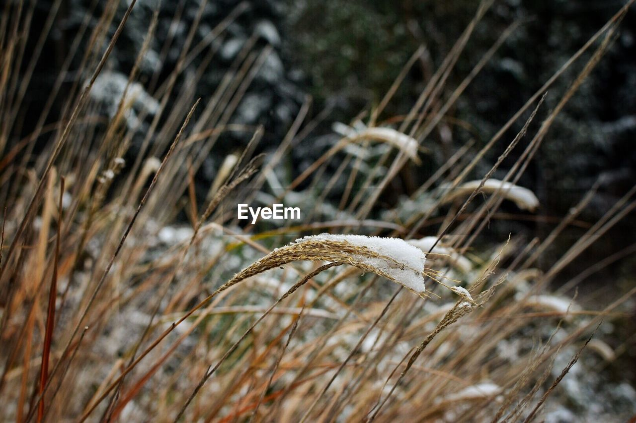 close-up, plant, focus on foreground, land, no people, nature, day, selective focus, field, growth, twig, beauty in nature, dry, outdoors, plant stem, frozen, stick - plant part, winter, fragility, cold temperature, dead plant