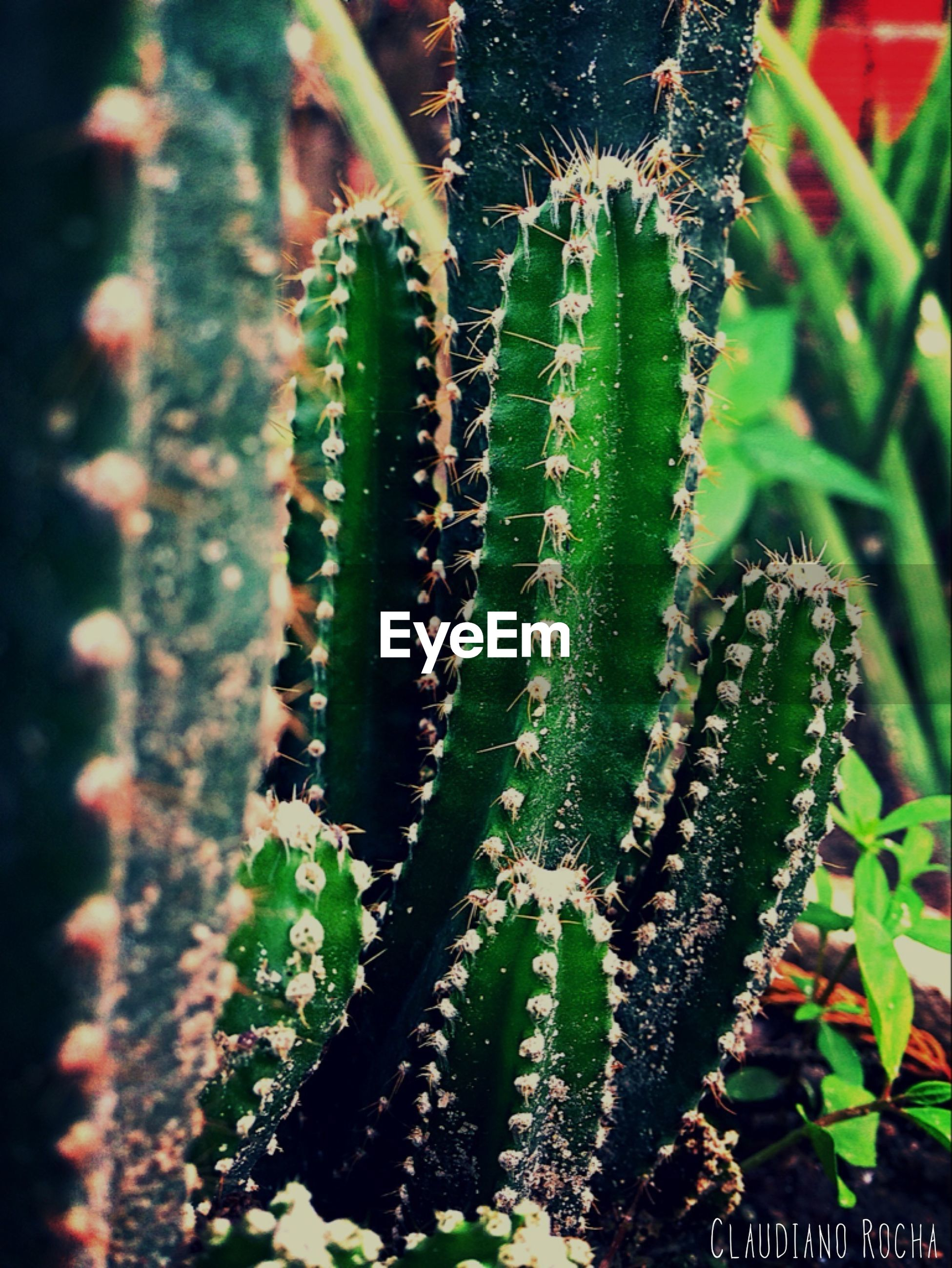 close-up, insect, animal themes, animals in the wild, focus on foreground, plant, one animal, wildlife, growth, nature, green color, spiked, thorn, beauty in nature, selective focus, outdoors, caterpillar, cactus, day, no people