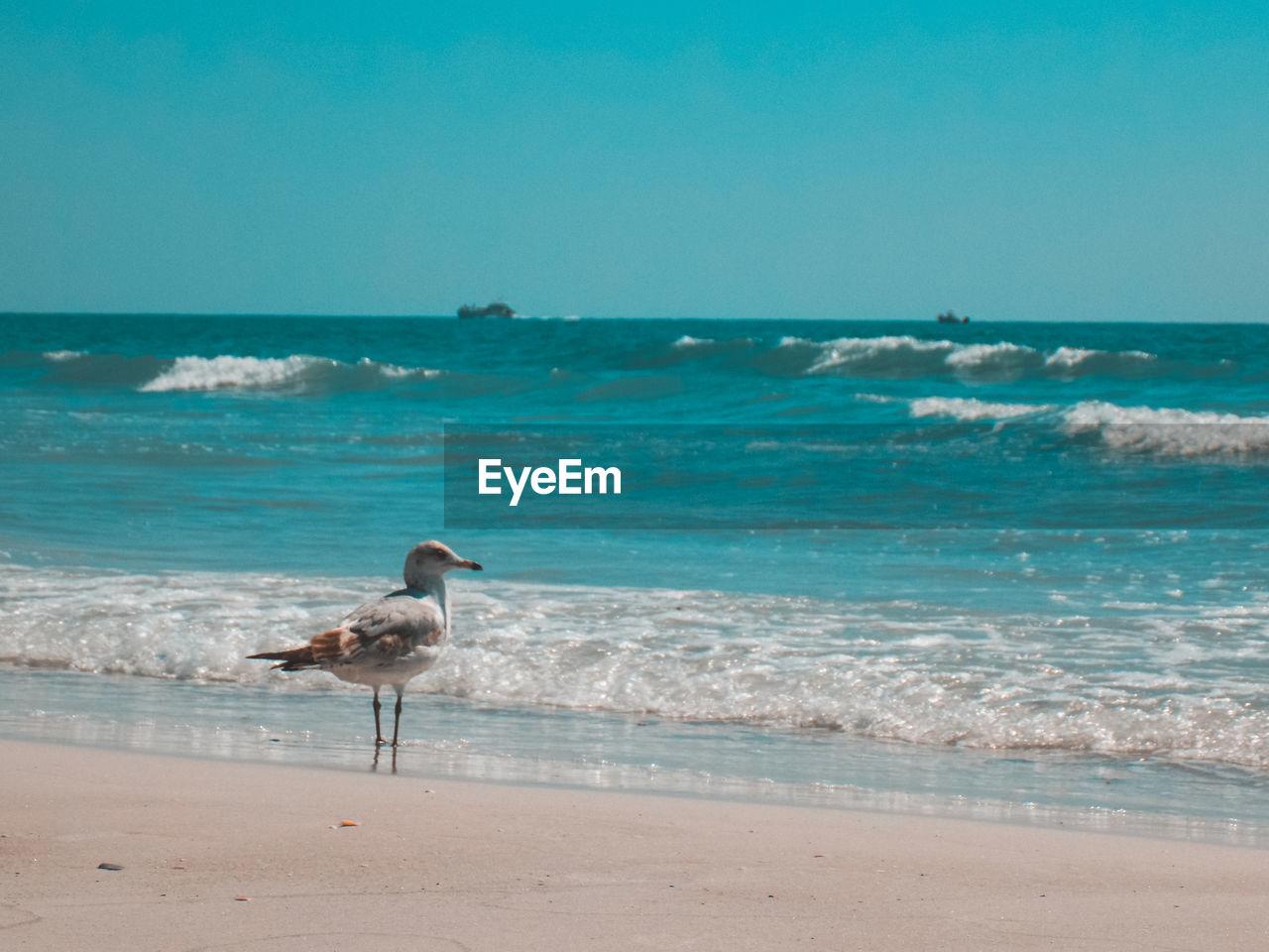 SEAGULL ON BEACH AGAINST THE SKY