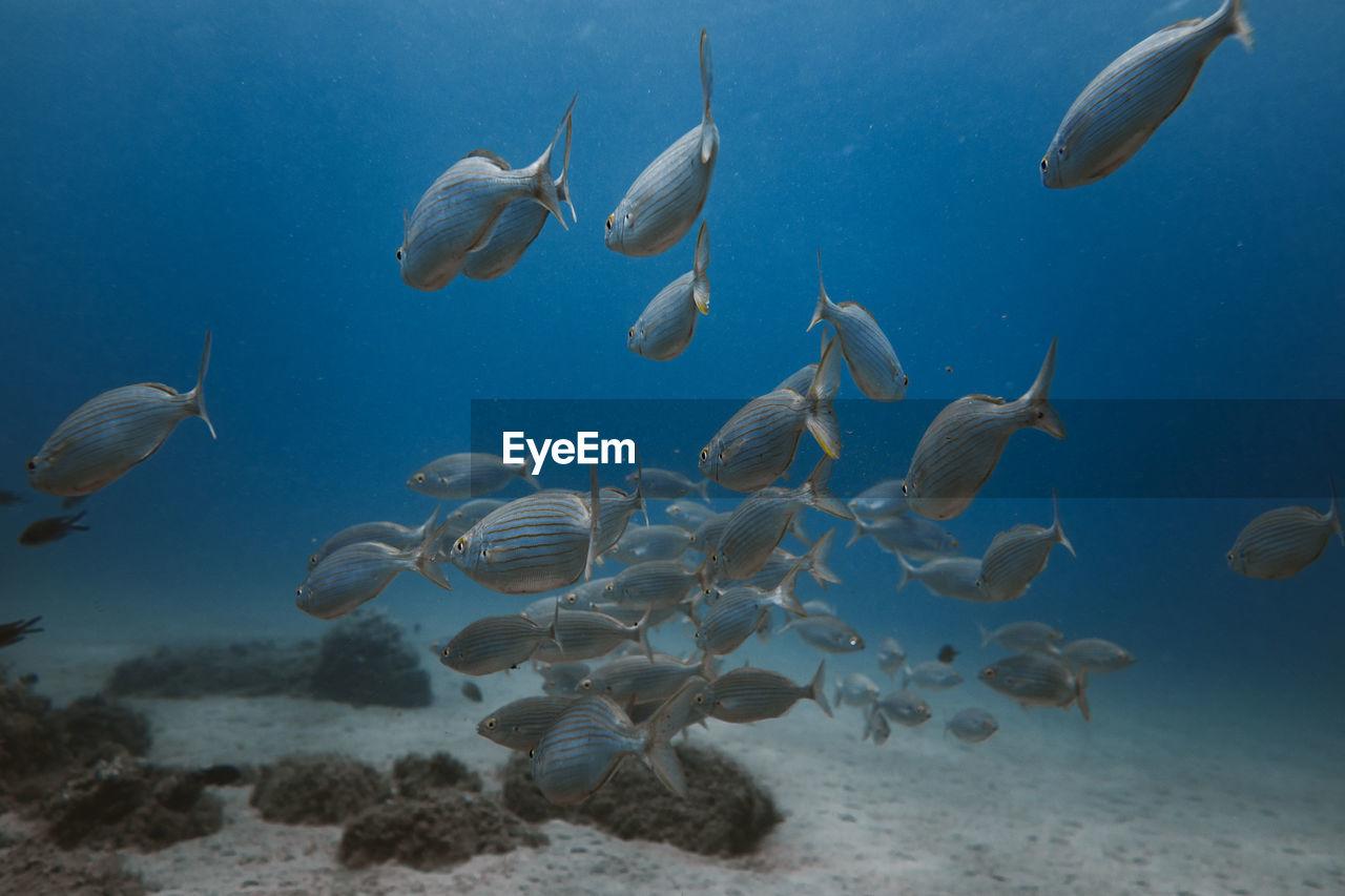FLOCK OF FISH UNDERWATER