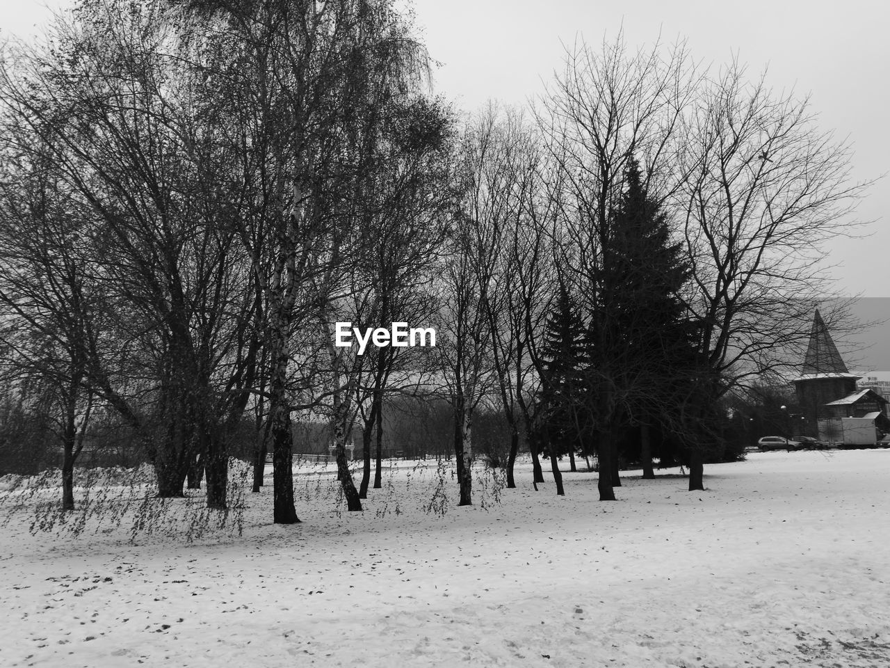 tree, winter, snow, cold temperature, nature, bare tree, weather, tranquility, beauty in nature, outdoors, branch, day, scenics, no people, landscape, sky