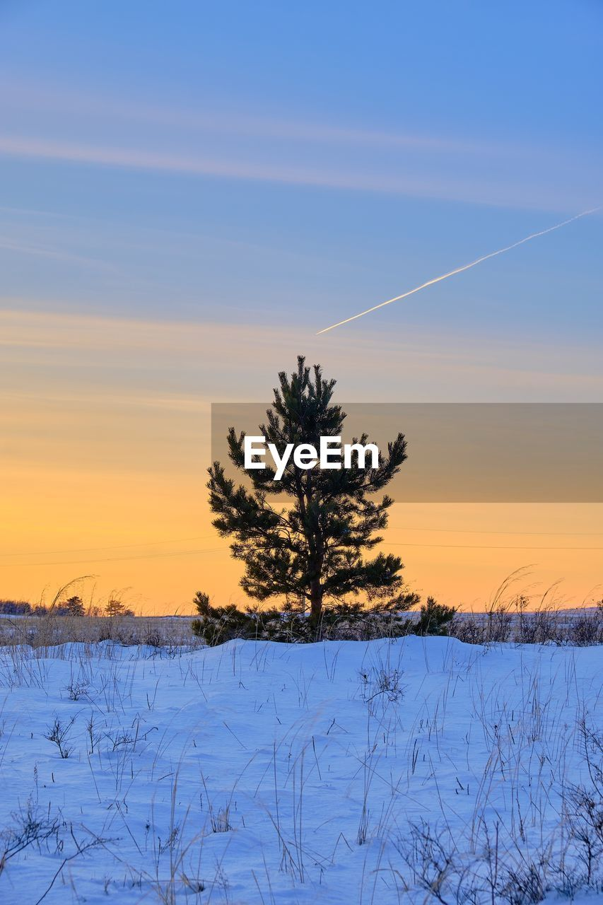 sky, sunset, winter, cold temperature, beauty in nature, tree, plant, tranquil scene, scenics - nature, tranquility, snow, non-urban scene, nature, landscape, field, no people, land, environment, vapor trail