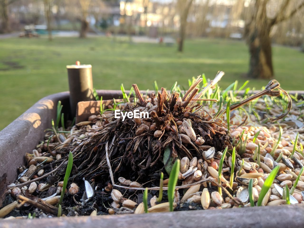 plant, day, tree, no people, focus on foreground, nature, growth, wood - material, close-up, outdoors, field, selective focus, land, grass, sunlight, heap, log, dry, brown, plant part