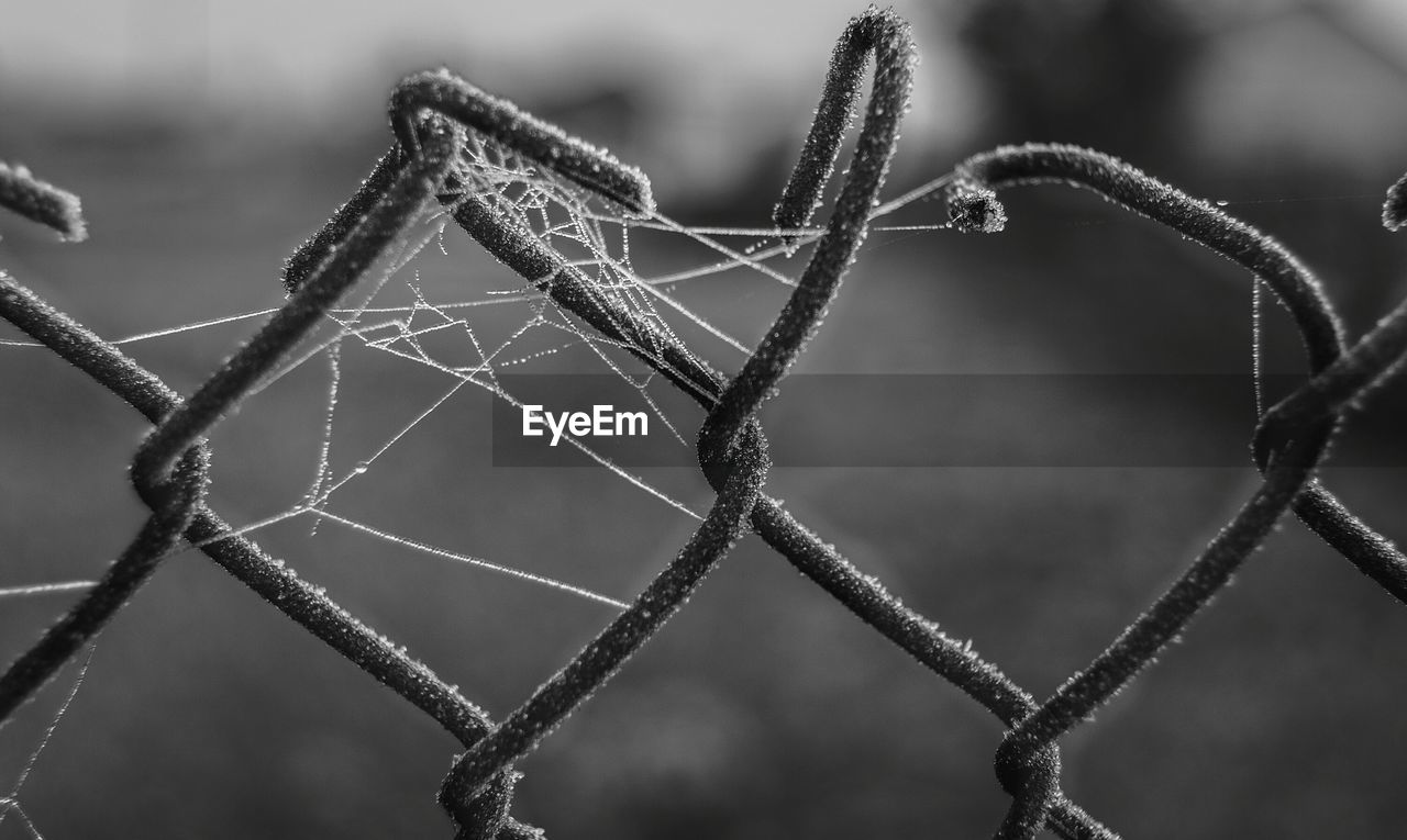 Close-Up Of Frosty Spider Web On Chainlink Fence