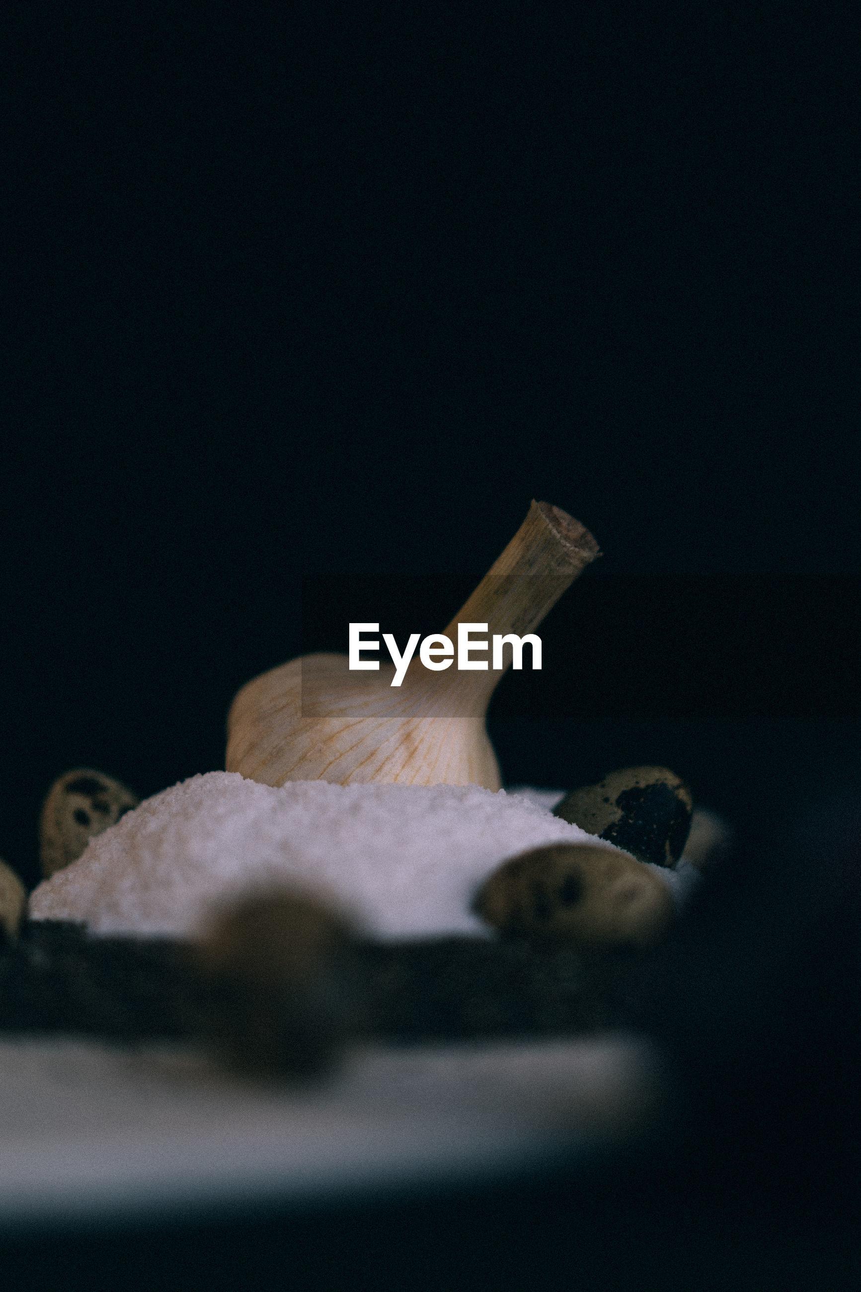 CLOSE-UP OF MUSHROOM