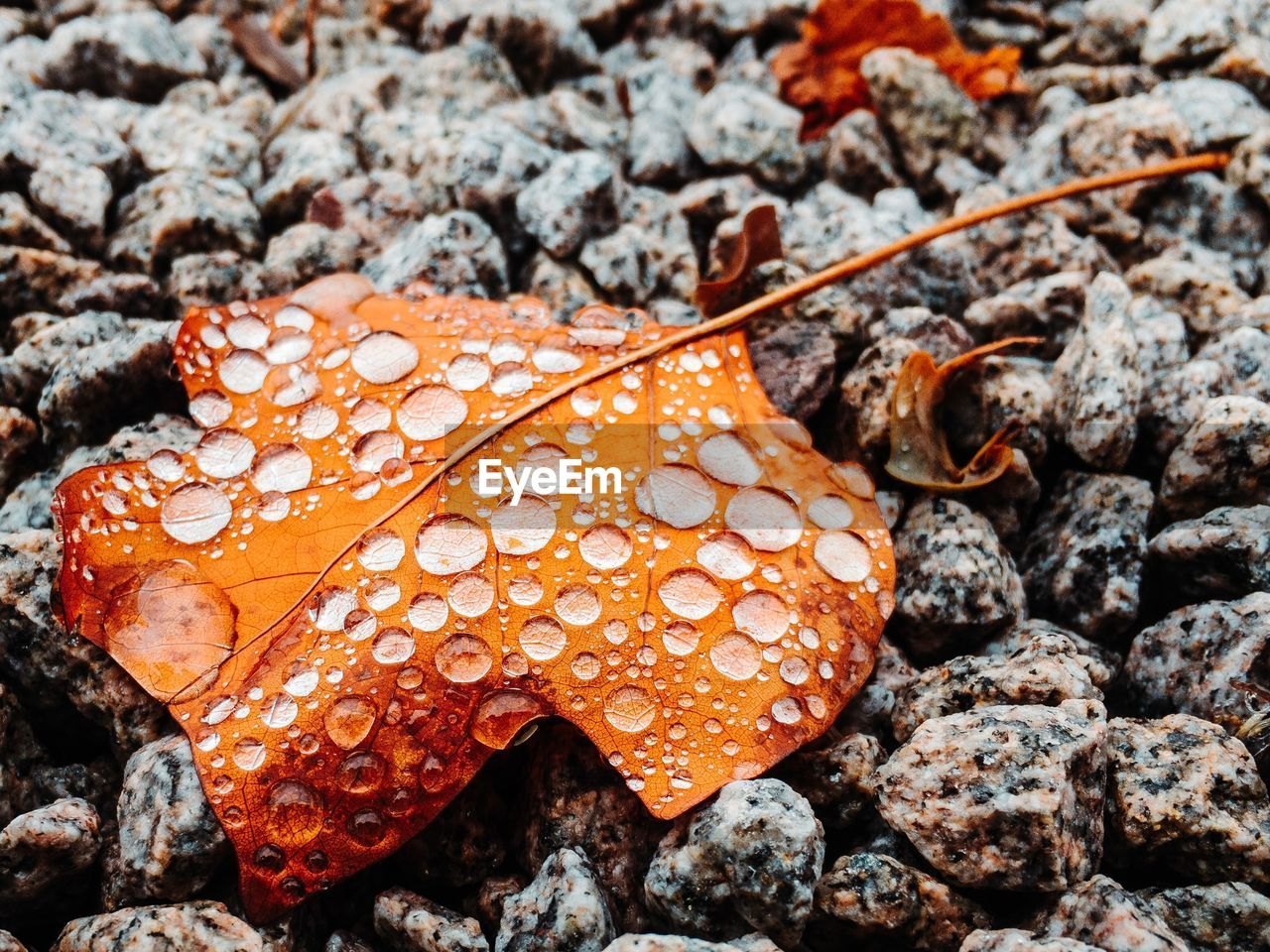 close-up, orange color, nature, no people, growth, day, beauty in nature, leaf, plant part, land, plant, water, focus on foreground, high angle view, outdoors, food, wet, red, mushroom, leaves