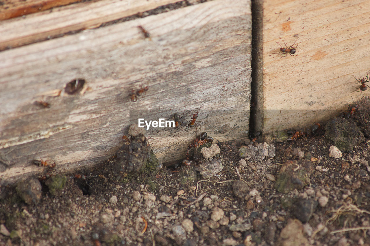 CLOSE-UP OF BEE ON WOODEN WALL