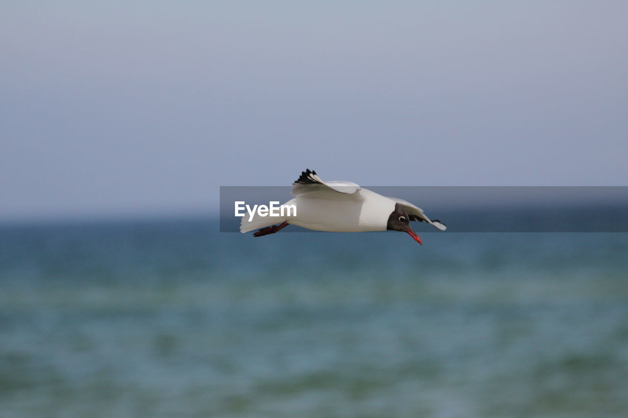 Side view of a bird flying over blurred water