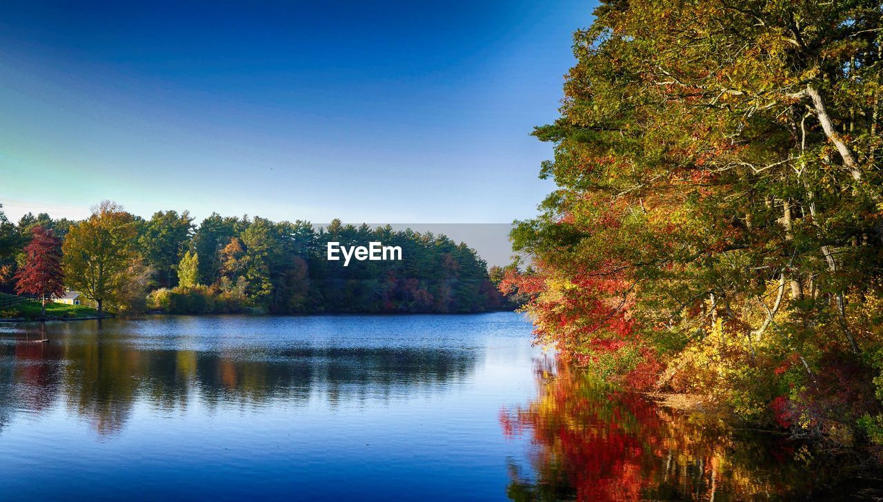 tree, autumn, nature, lake, change, water, beauty in nature, leaf, tranquil scene, scenics, reflection, no people, tranquility, growth, forest, outdoors, clear sky, day, blue, sky