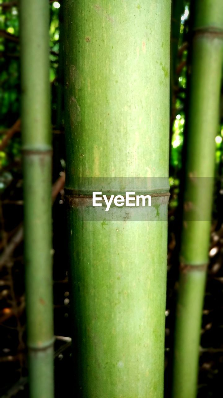 bamboo - plant, bamboo, no people, green color, close-up, growth, land, bamboo grove, plant, day, focus on foreground, forest, outdoors, nature, tree, tree trunk, beauty in nature, trunk, selective focus, sunlight