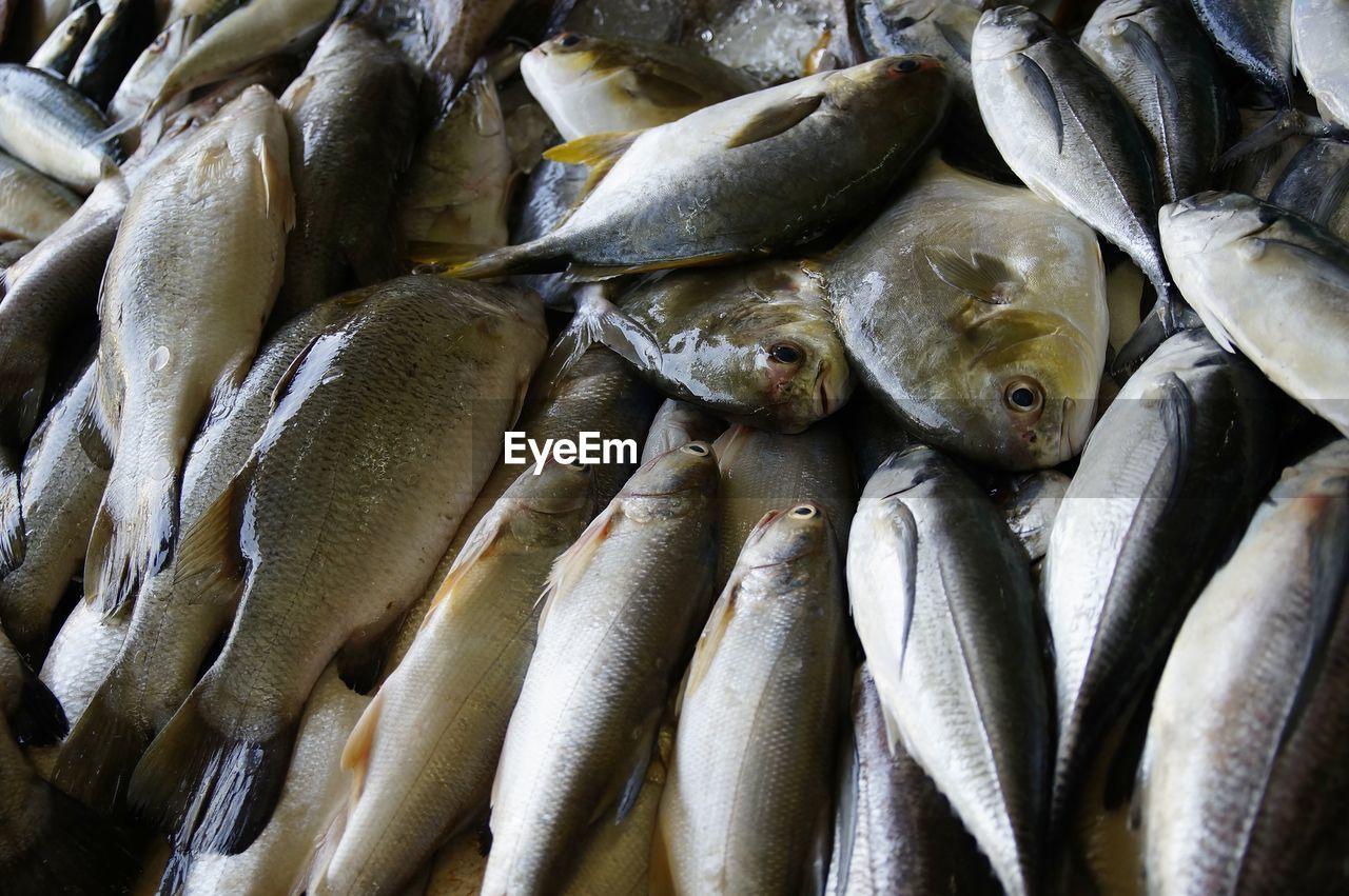 FULL FRAME SHOT OF FISH IN MARKET